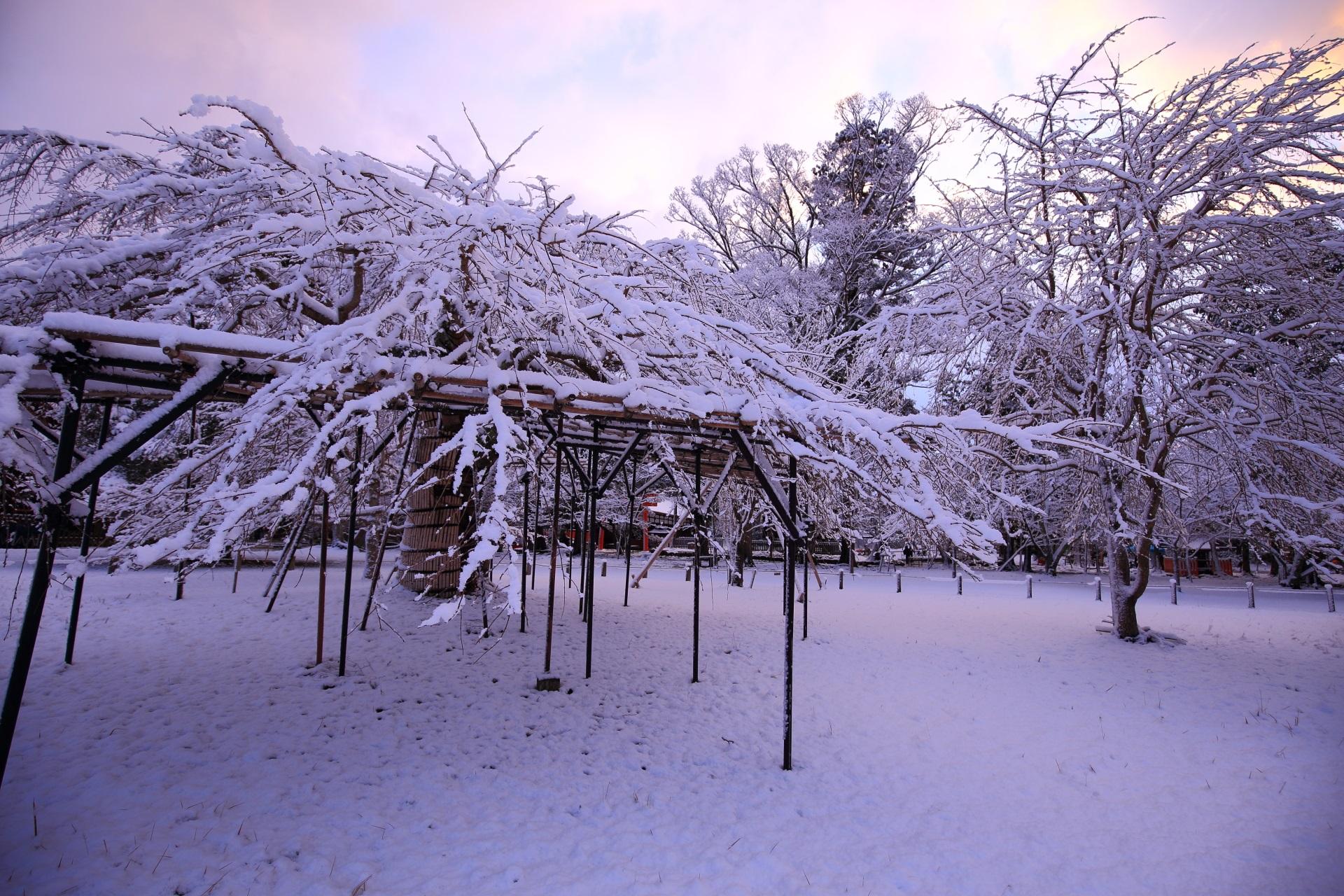 上賀茂神社の淡い朝焼けの空から降り注ぐ雪の華