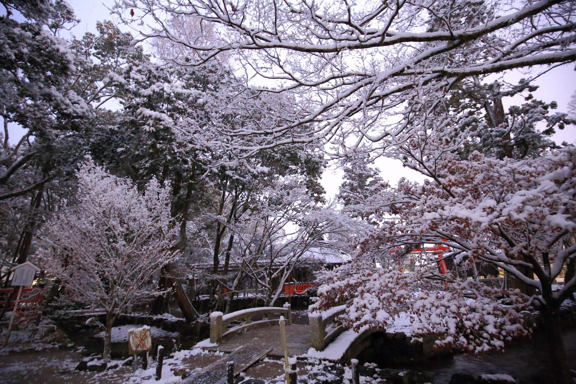 上賀茂神社のならの小川で咲き誇る多様な雪の華