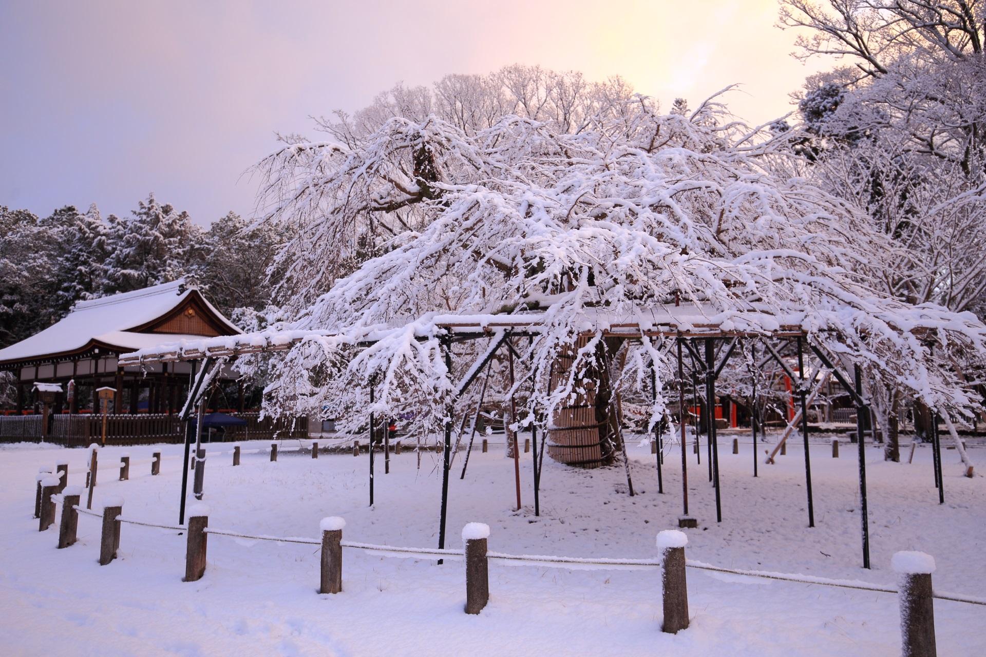 ほんのりと朝焼けにつつまれる雪の上賀茂神社
