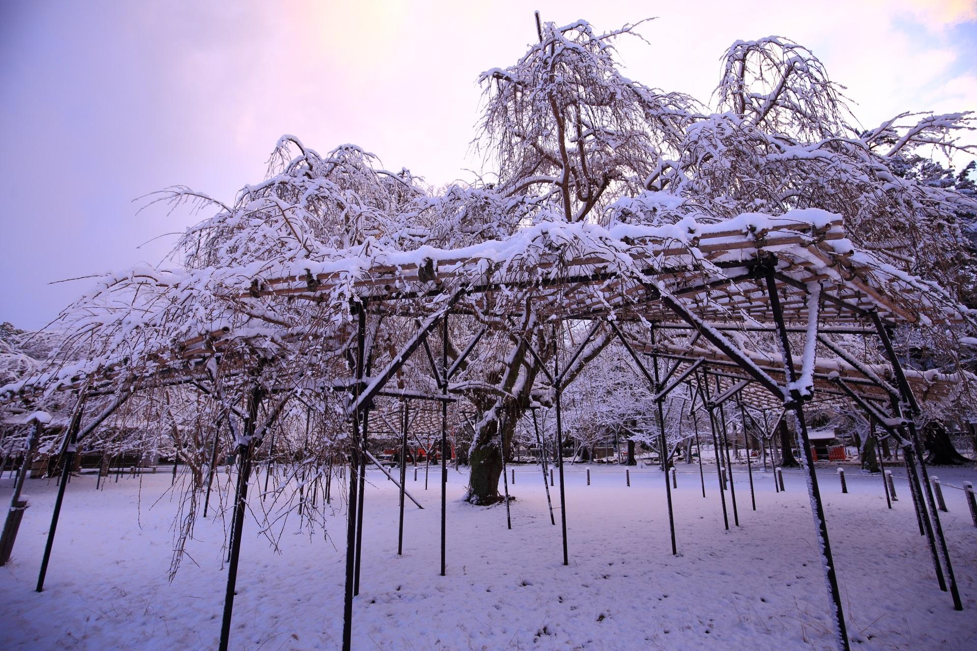 上賀茂神社の斎王桜の雪景色