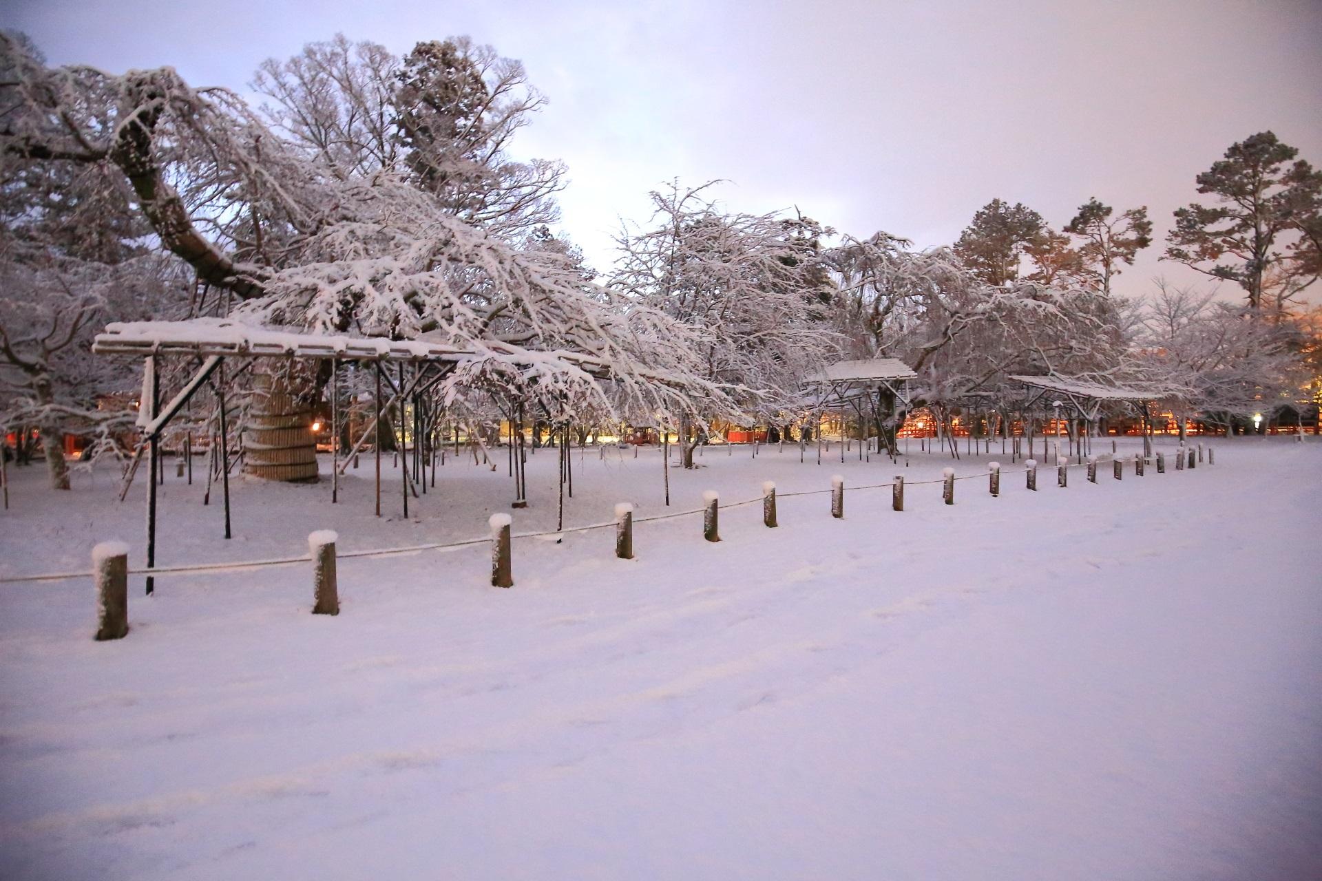 上賀茂神社のシダレザクラの雪景色