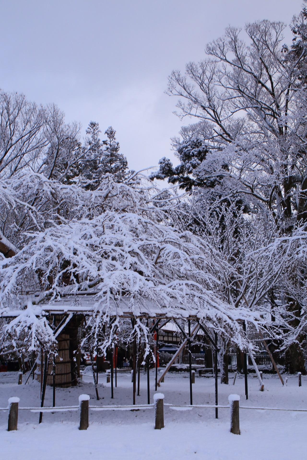 上から下まで真っ白に染まる雪の上賀茂神社