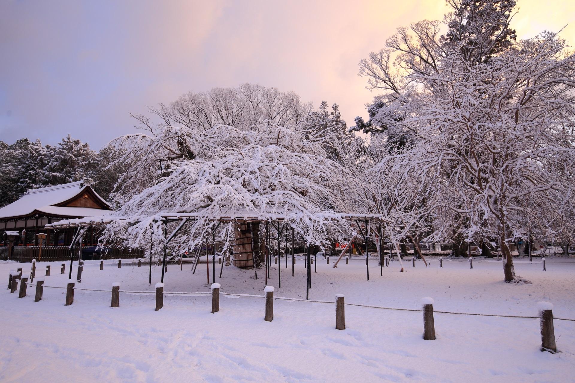 上賀茂神社の幻想的な冬景色