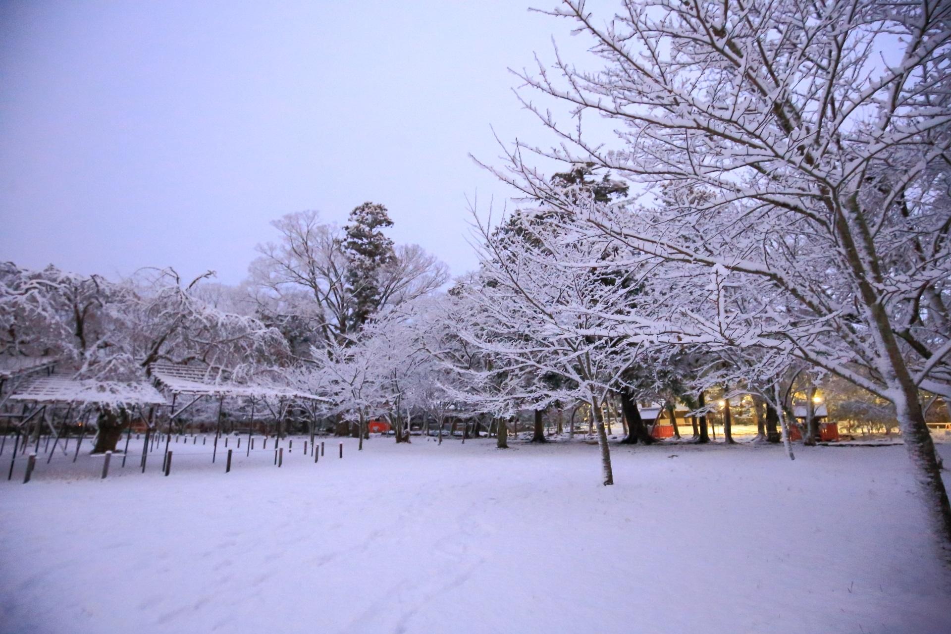上賀茂神社の薄暗い境内で華やぐ雪の花