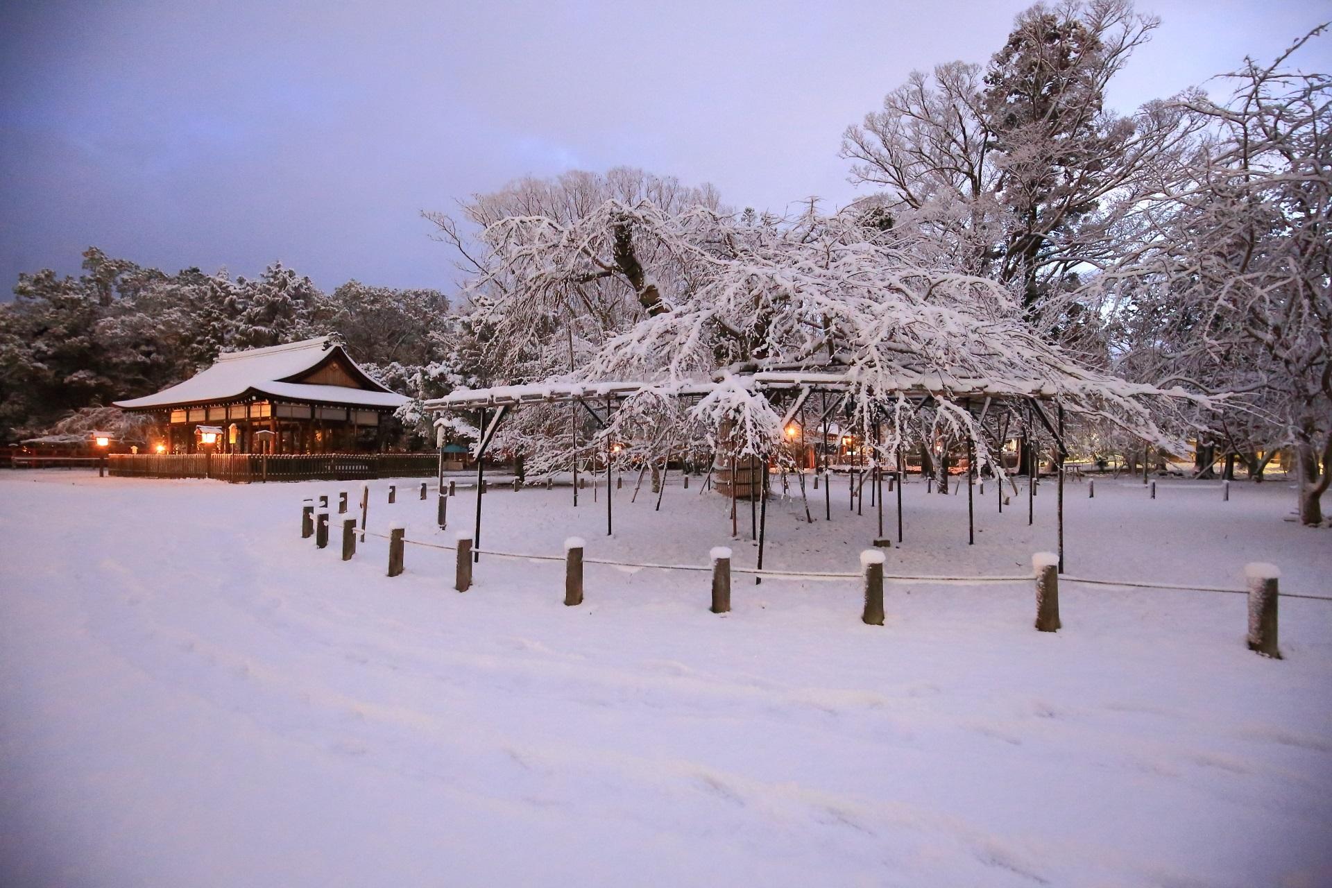 上賀茂神社の雪につつまれる枝垂れ桜と御所舎