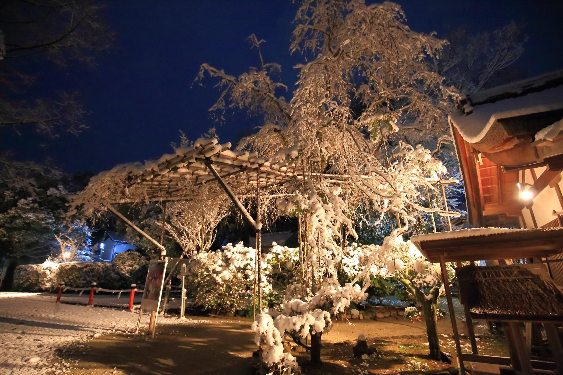 上賀茂神社の夜空を華やぐみあれ桜の雪の花