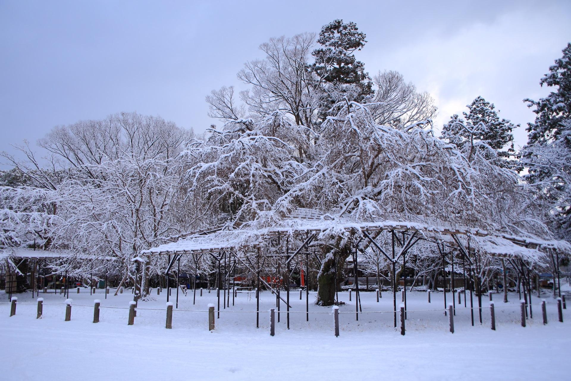 冬の上賀茂神社の幻想的な雪の光景