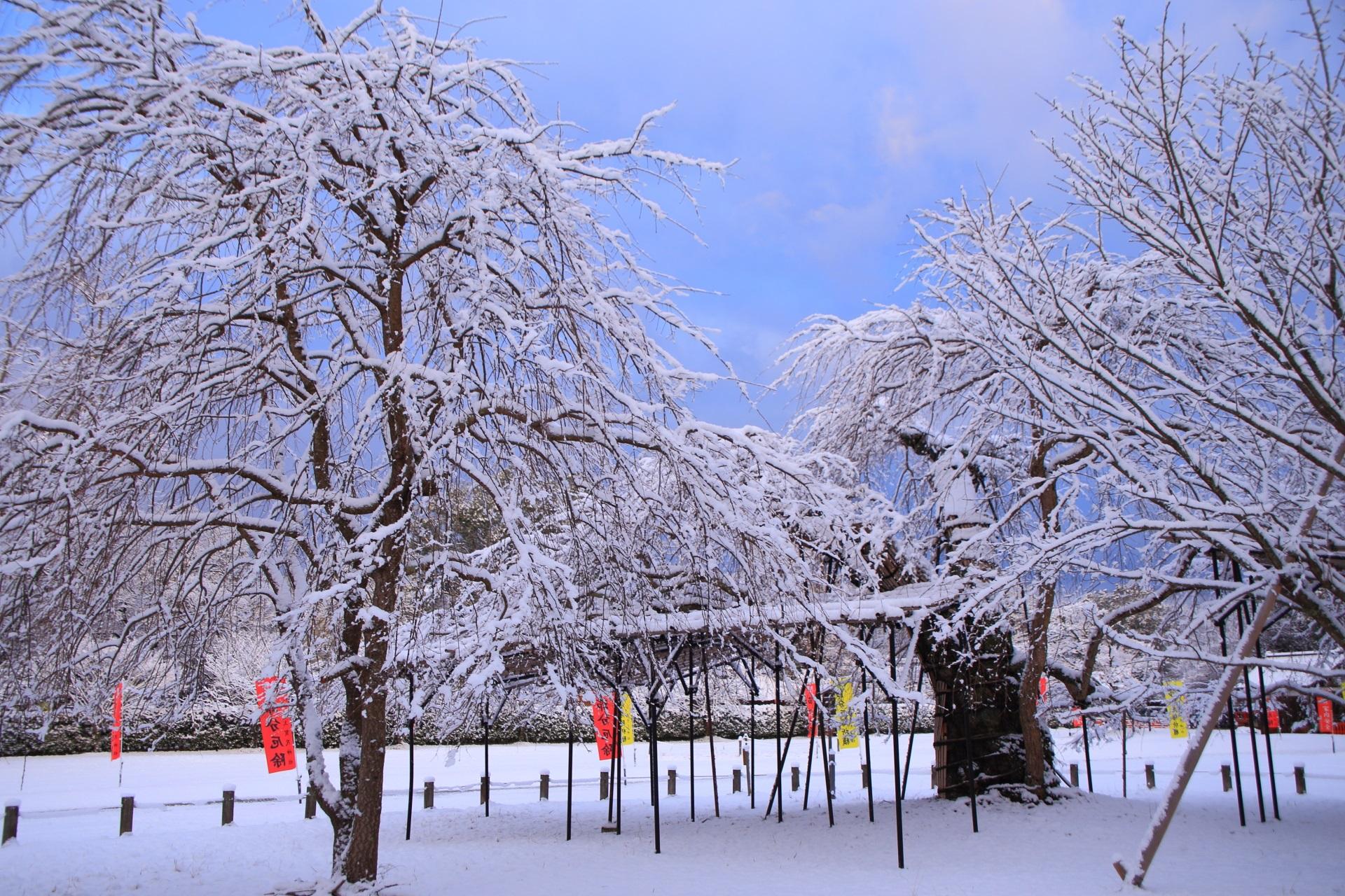 上賀茂神社の空に映える雪の華