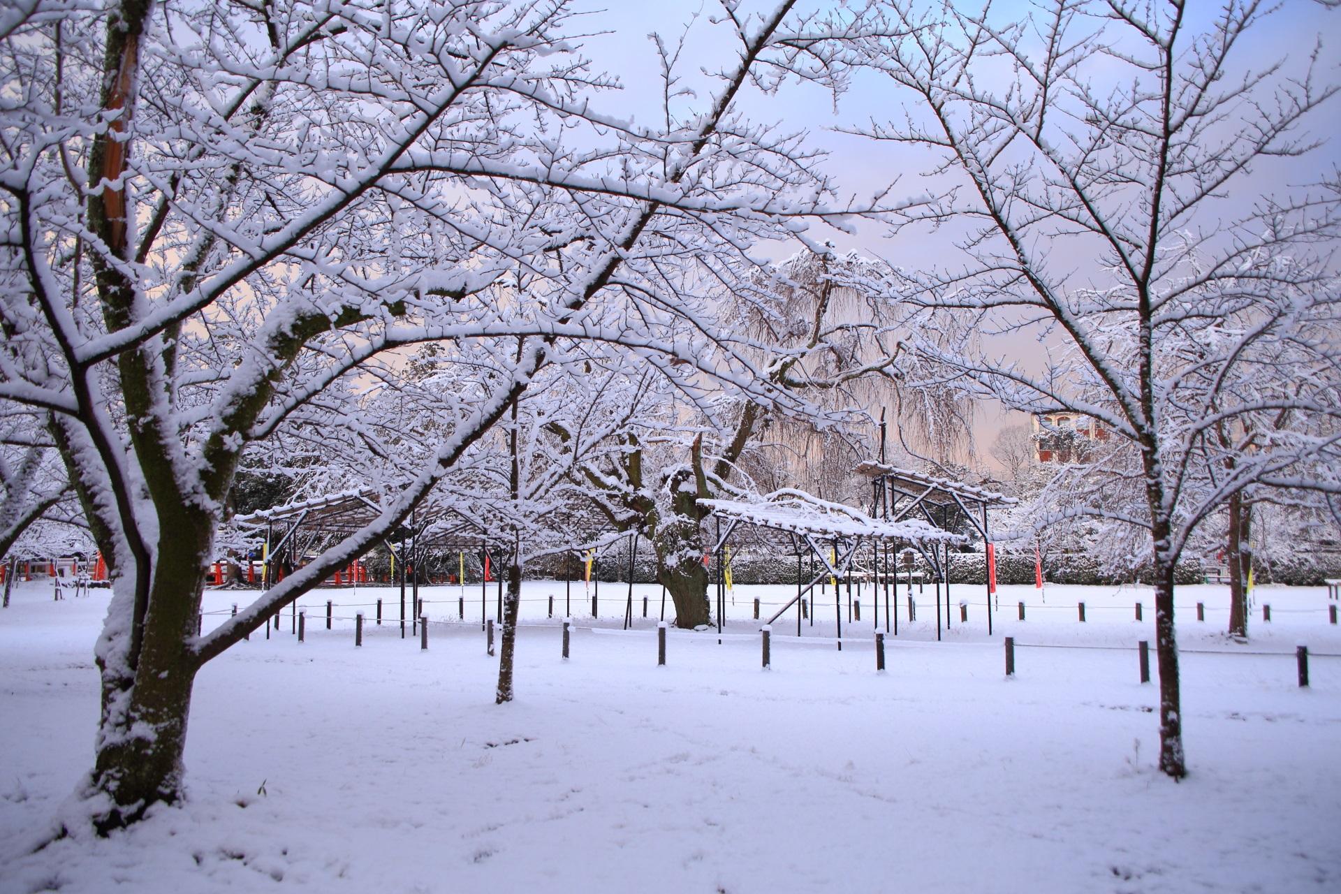 上賀茂神社の朝焼けの空を彩る雪の花