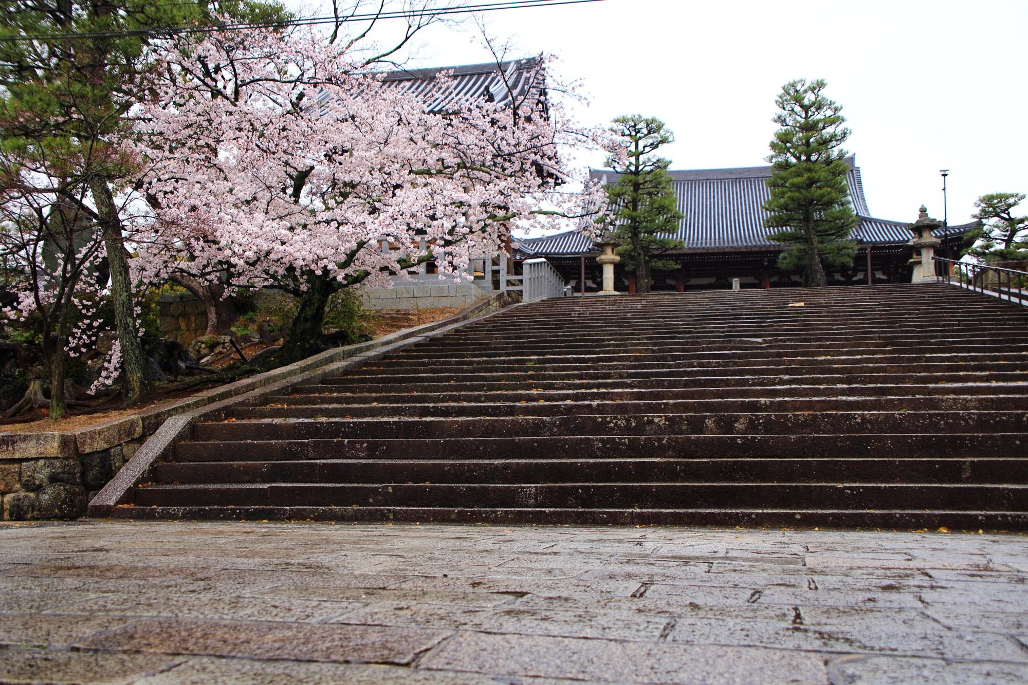石段と御影堂と桜