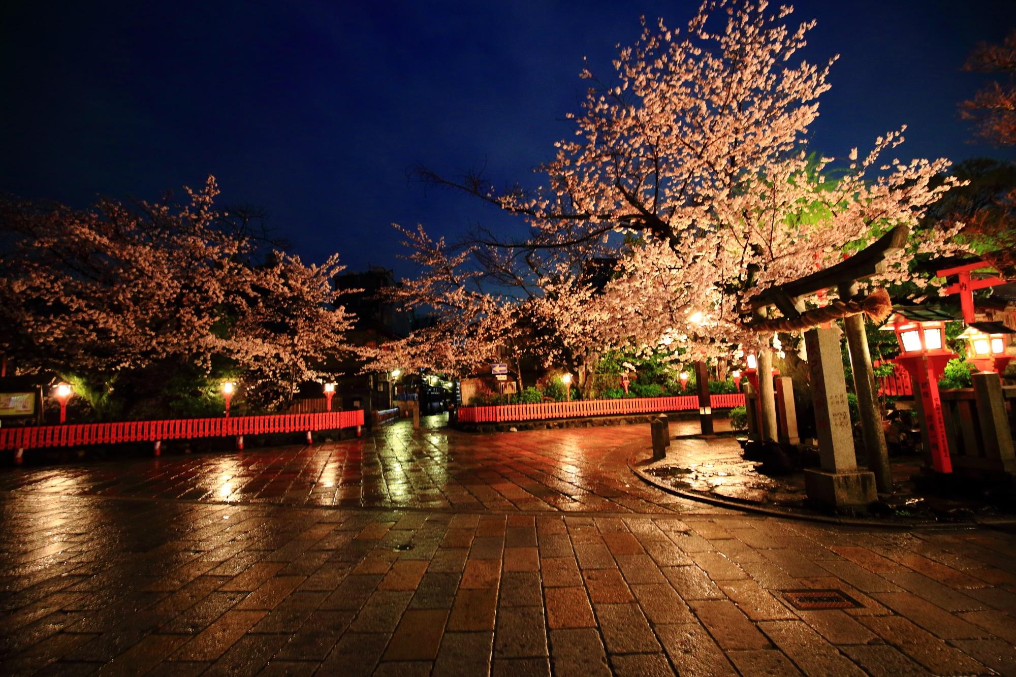 桜の名所の祇園白川の満開の桜と辰巳神社
