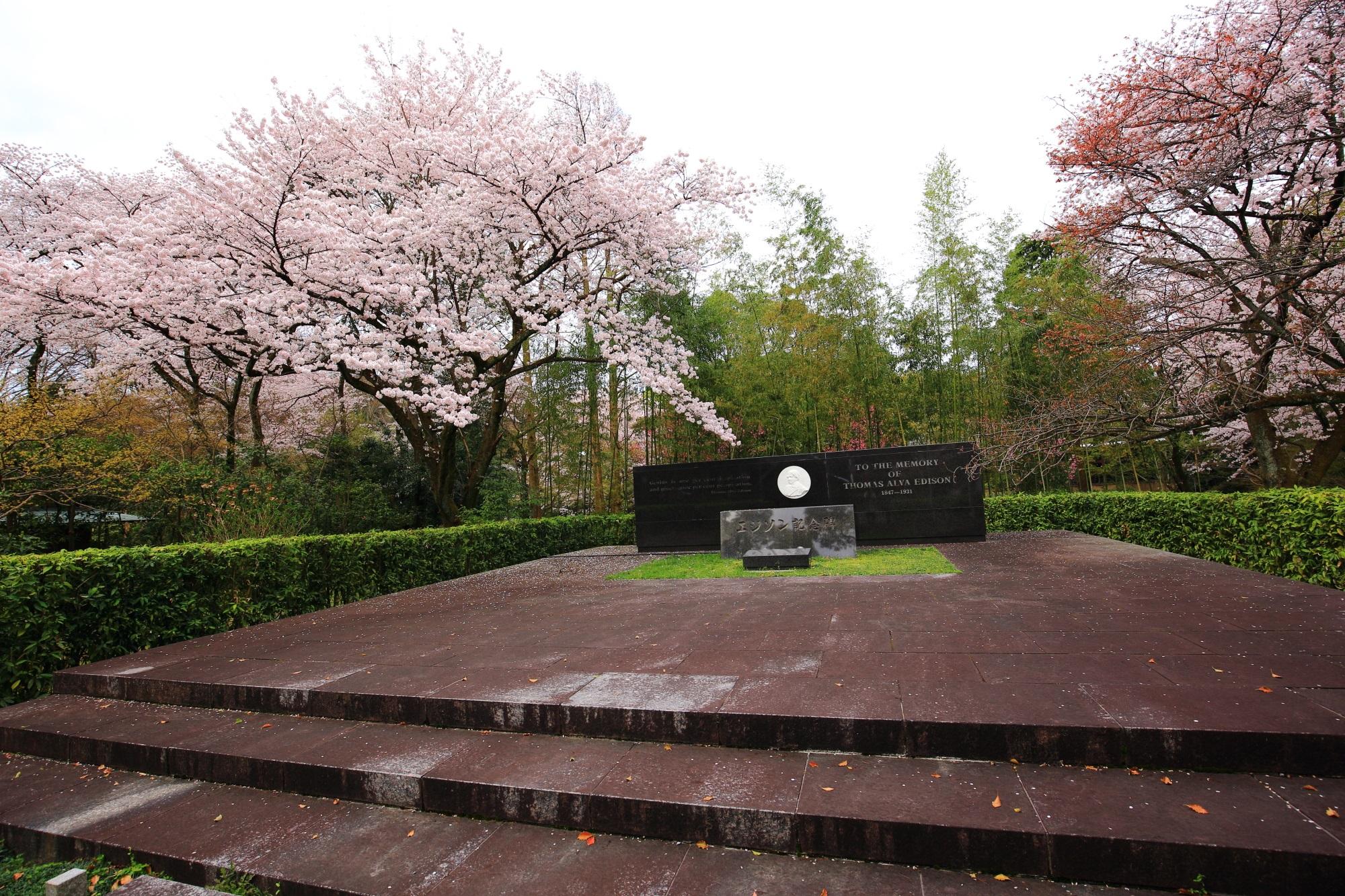 石清水八幡宮のエジソン記念碑と桜