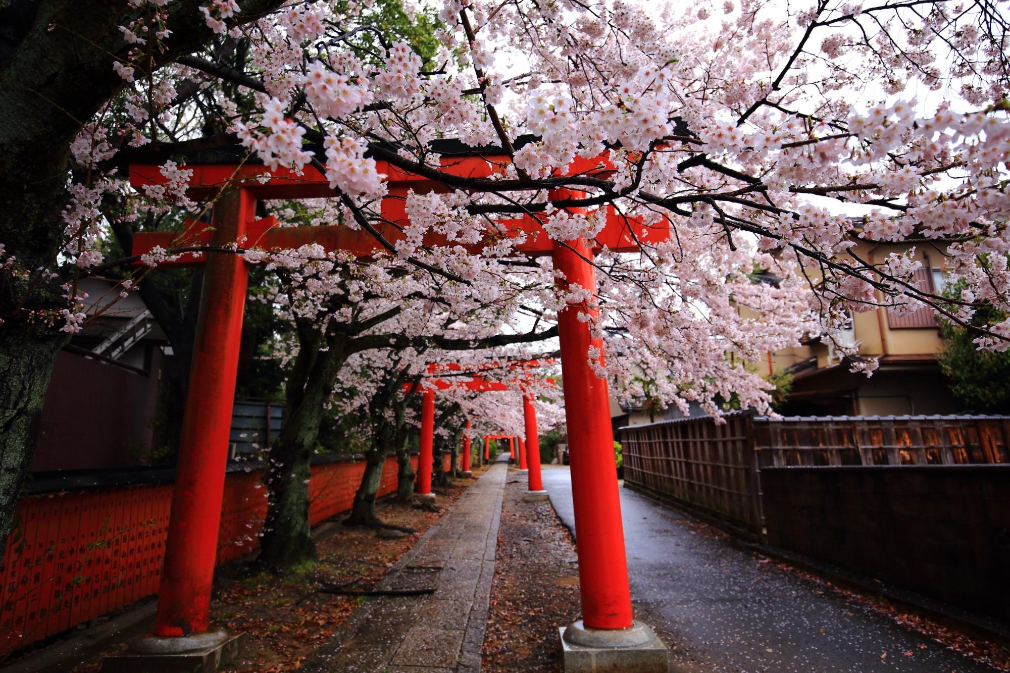 鳥居や参道沿いに咲く華やかな桜