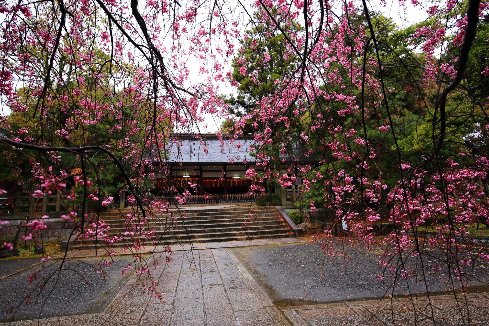 宗忠神社の拝殿としだれ桜