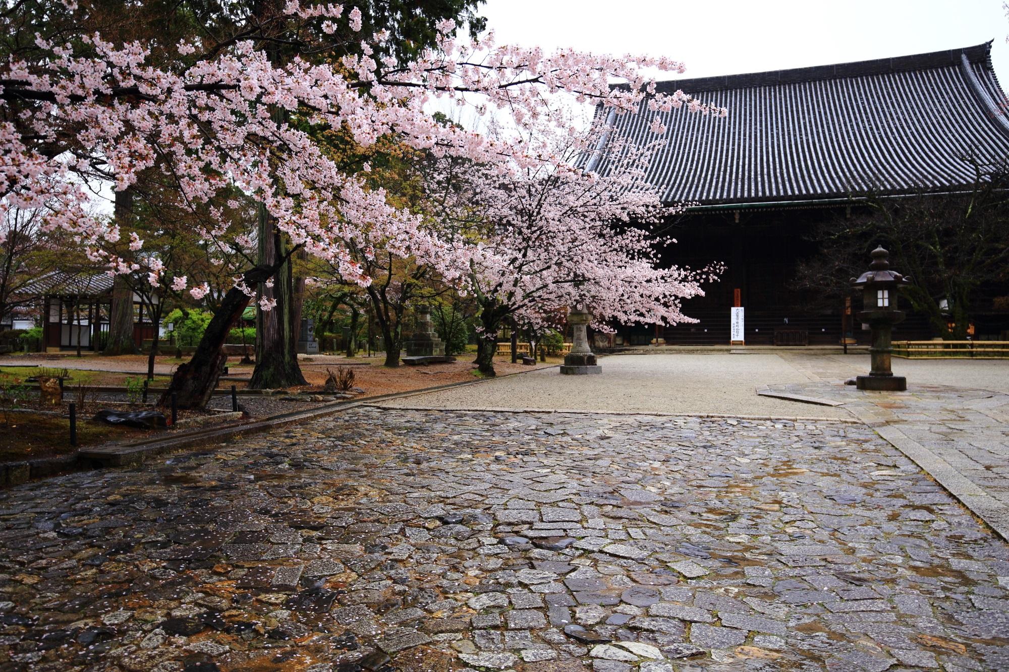 桜の名所の真如堂の本堂と満開の桜