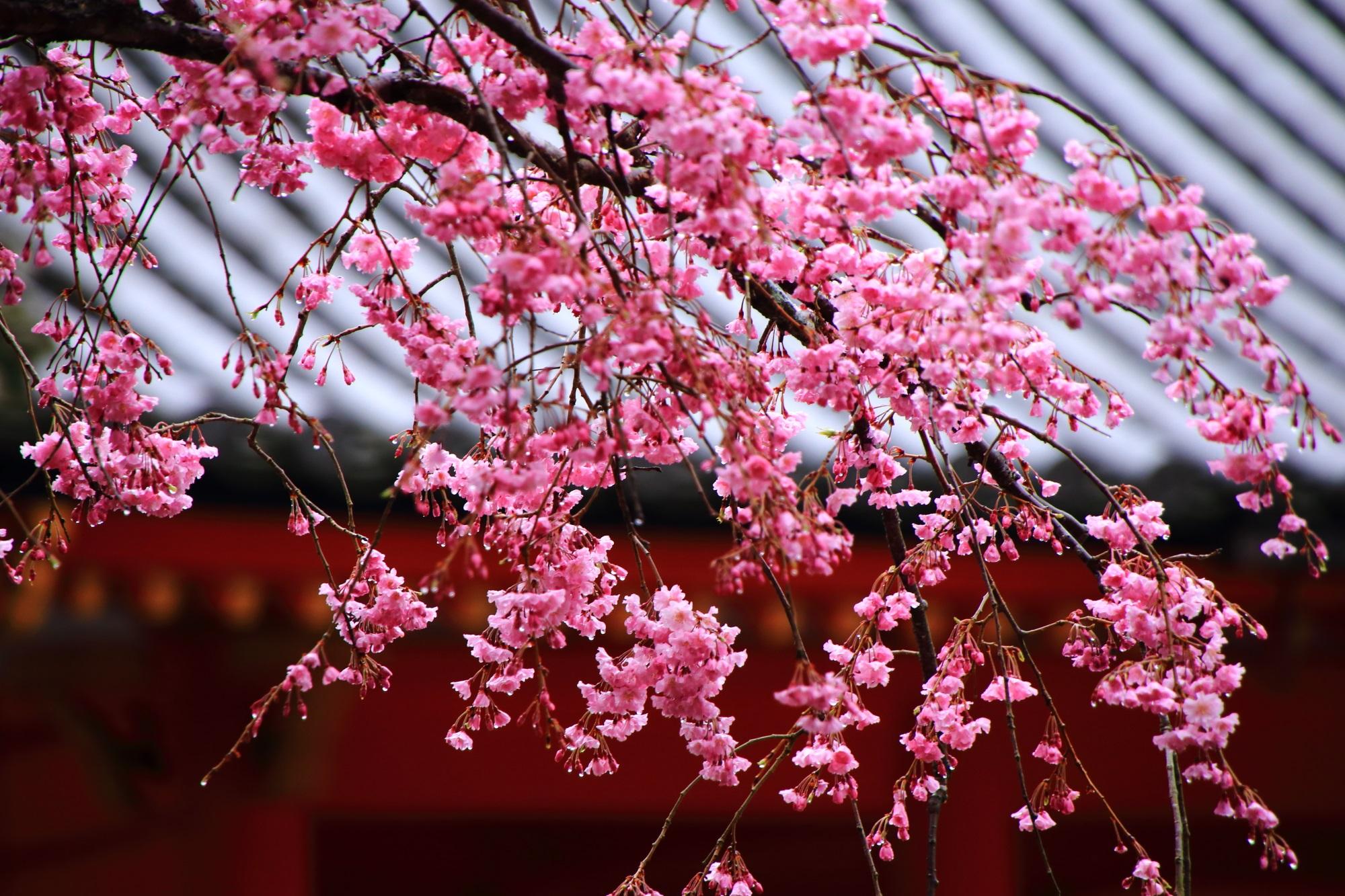 鮮やかな濃いめのピンクの花