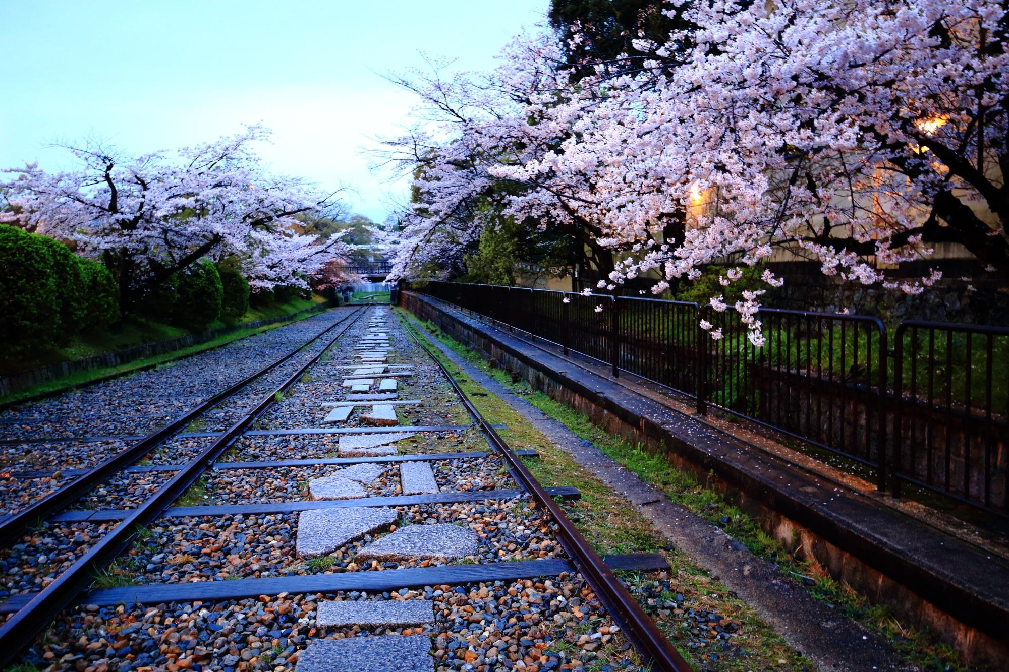 雨に濡れた線路と続く華やかな桜並木