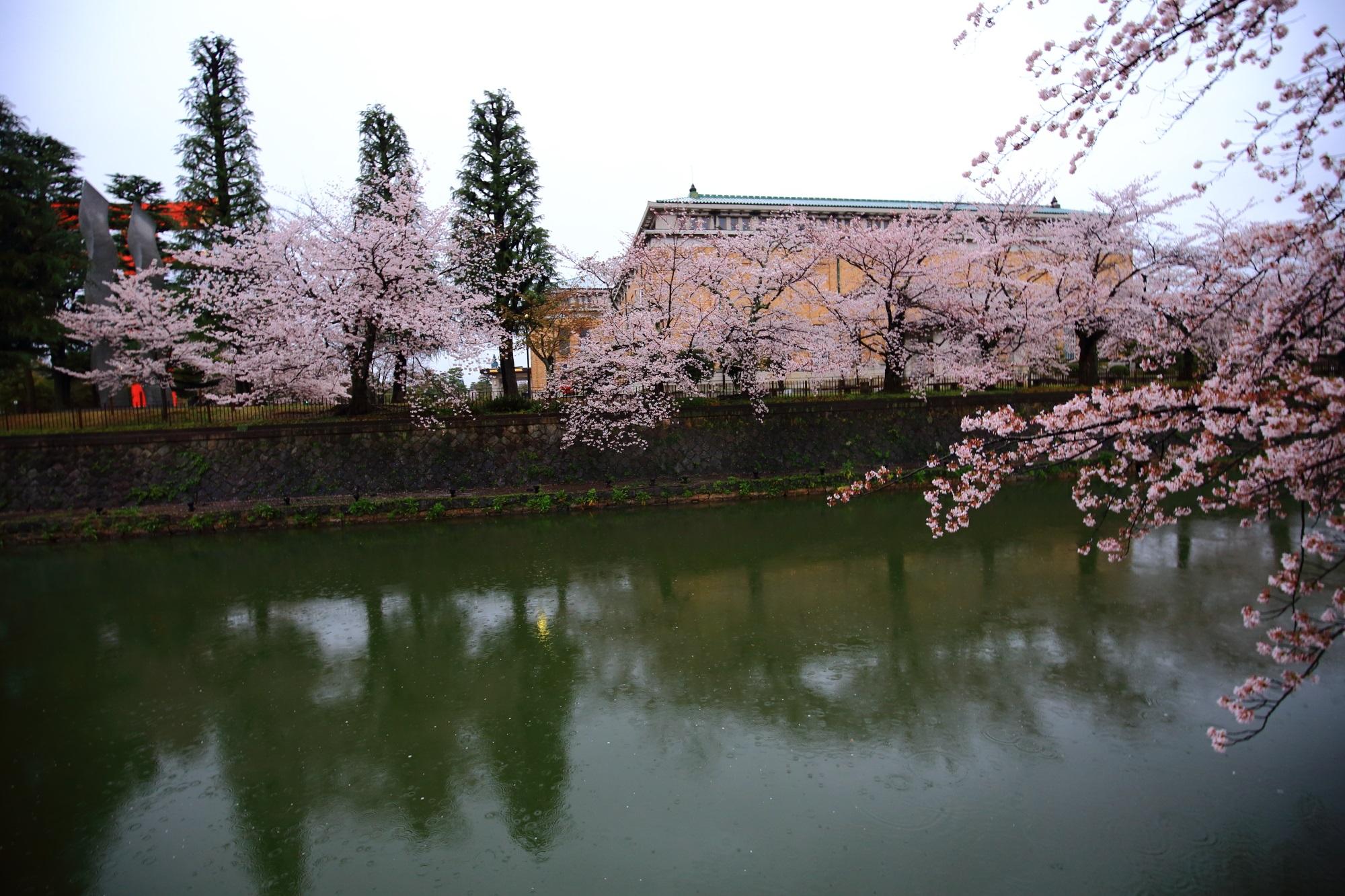 桜の名所の岡崎疏水と京都市美術館の桜