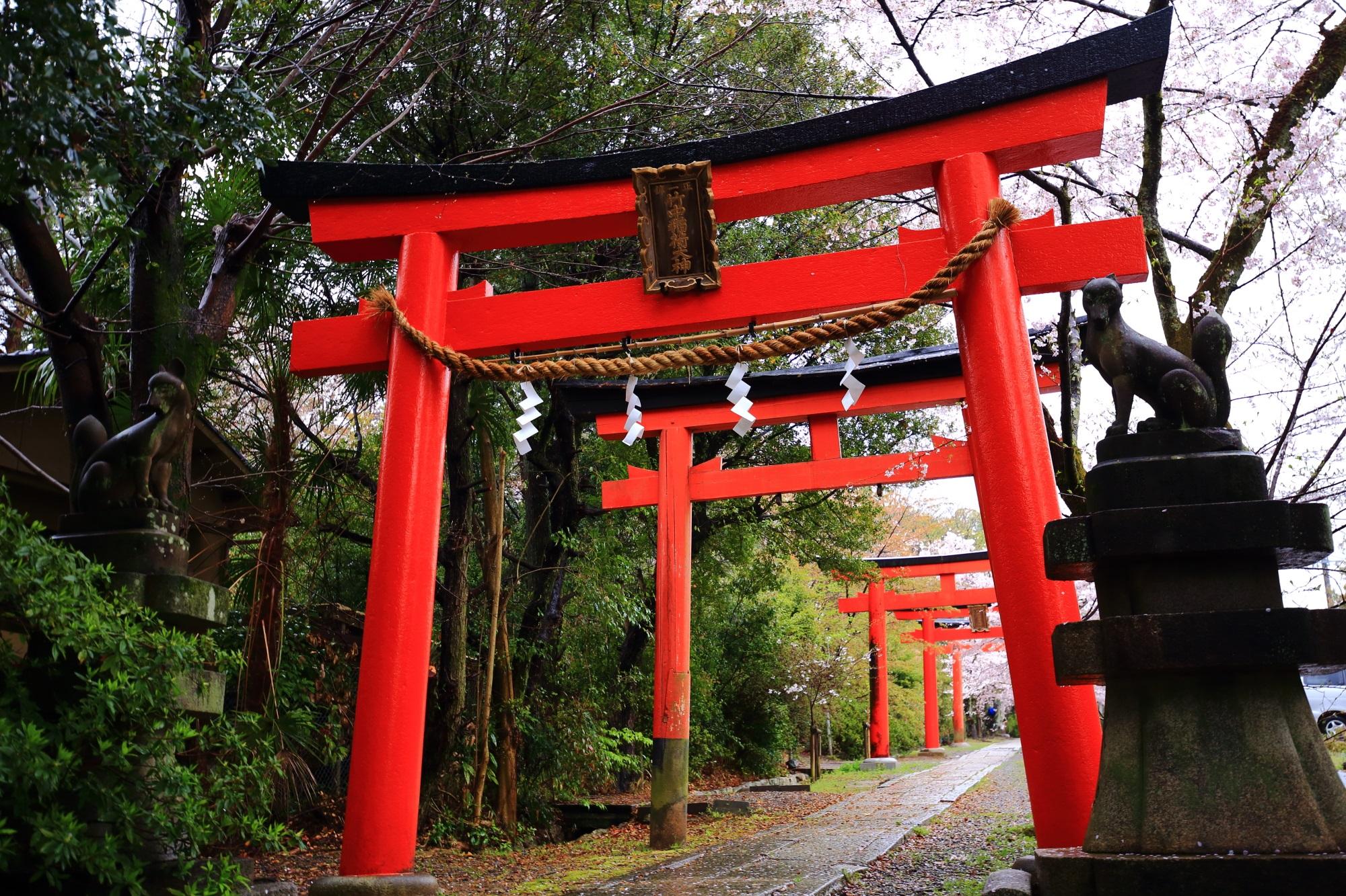 赤い鳥居がずらっ~と並ぶ竹中稲荷神社