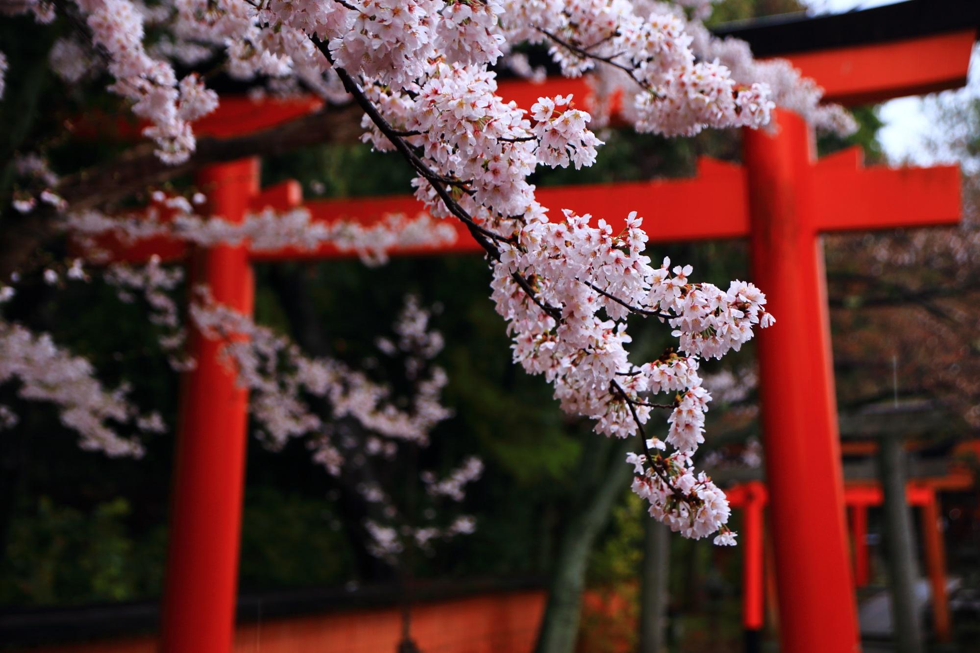 いっぱい綺麗な花をつけた枝