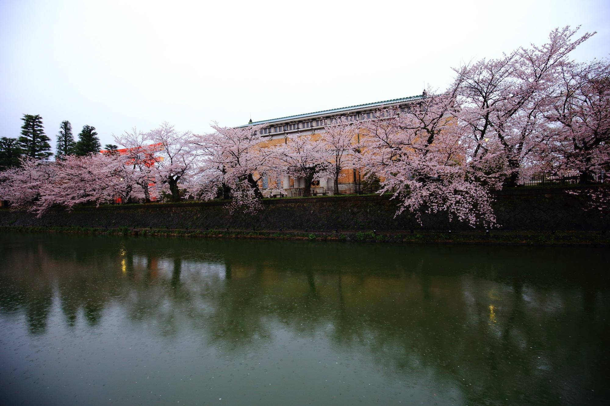 高画質 岡崎疏水 桜 満開 春