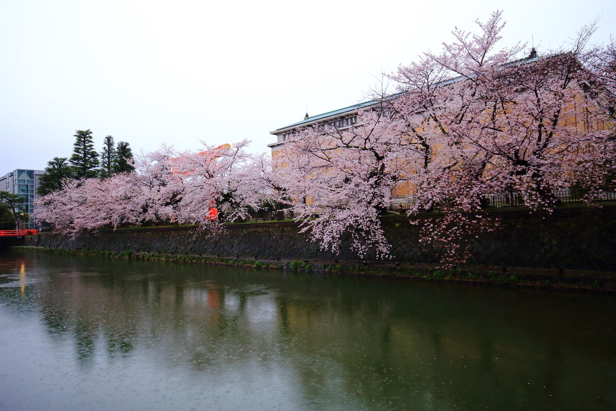 市美術館と岡崎疏水の華やかな満開の桜
