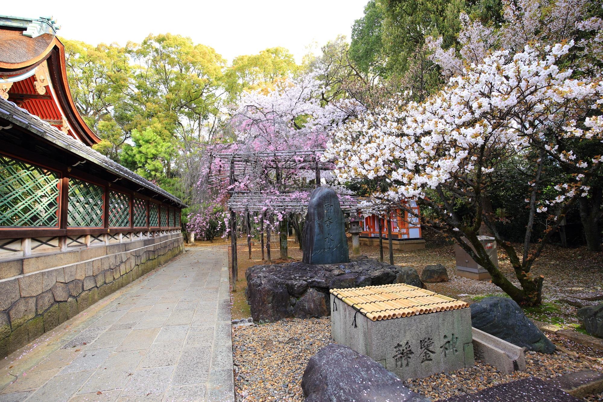 高画質 写真 御香宮神社 桜
