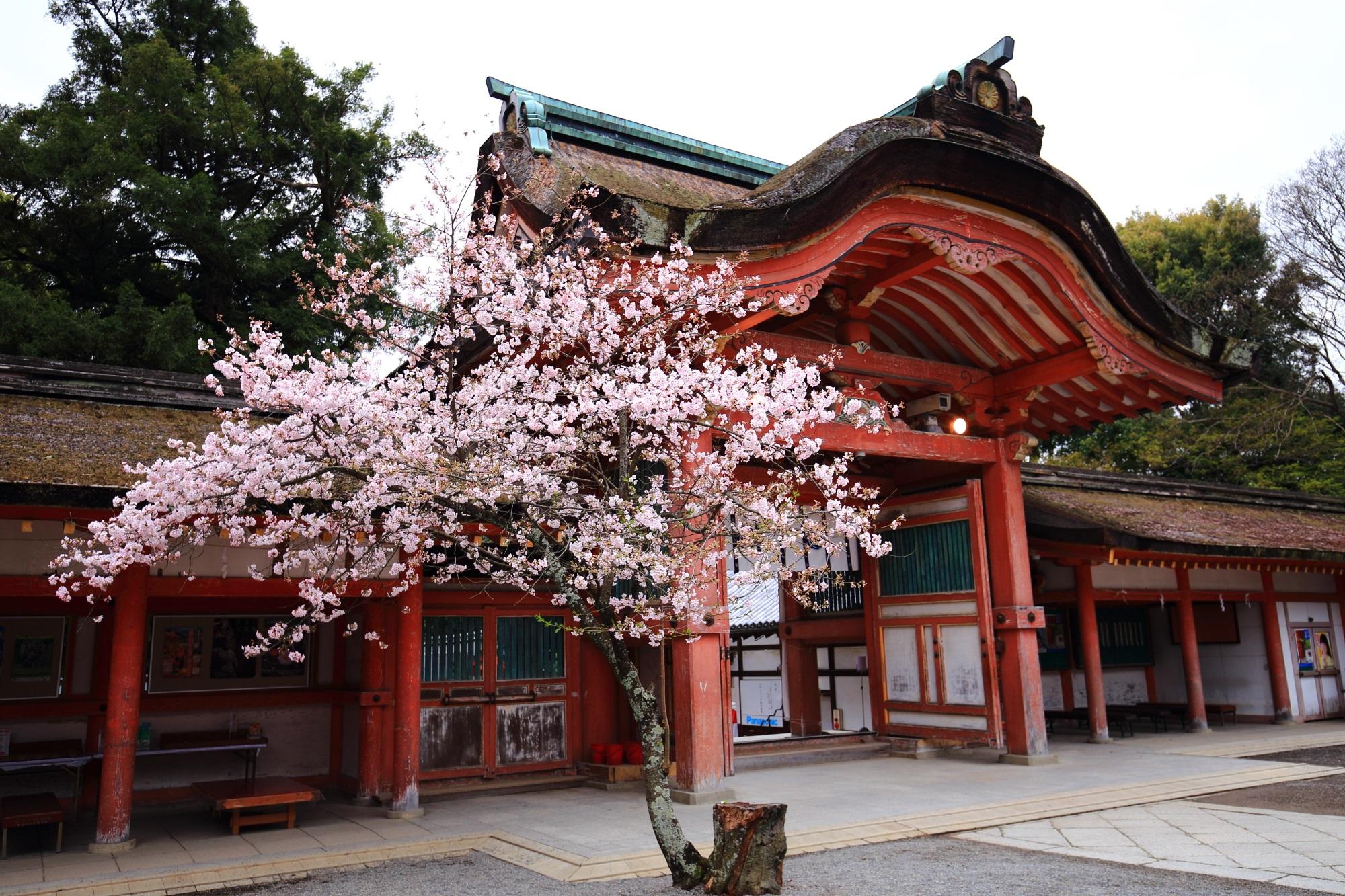 朱色の南総門をピンクに染める桜