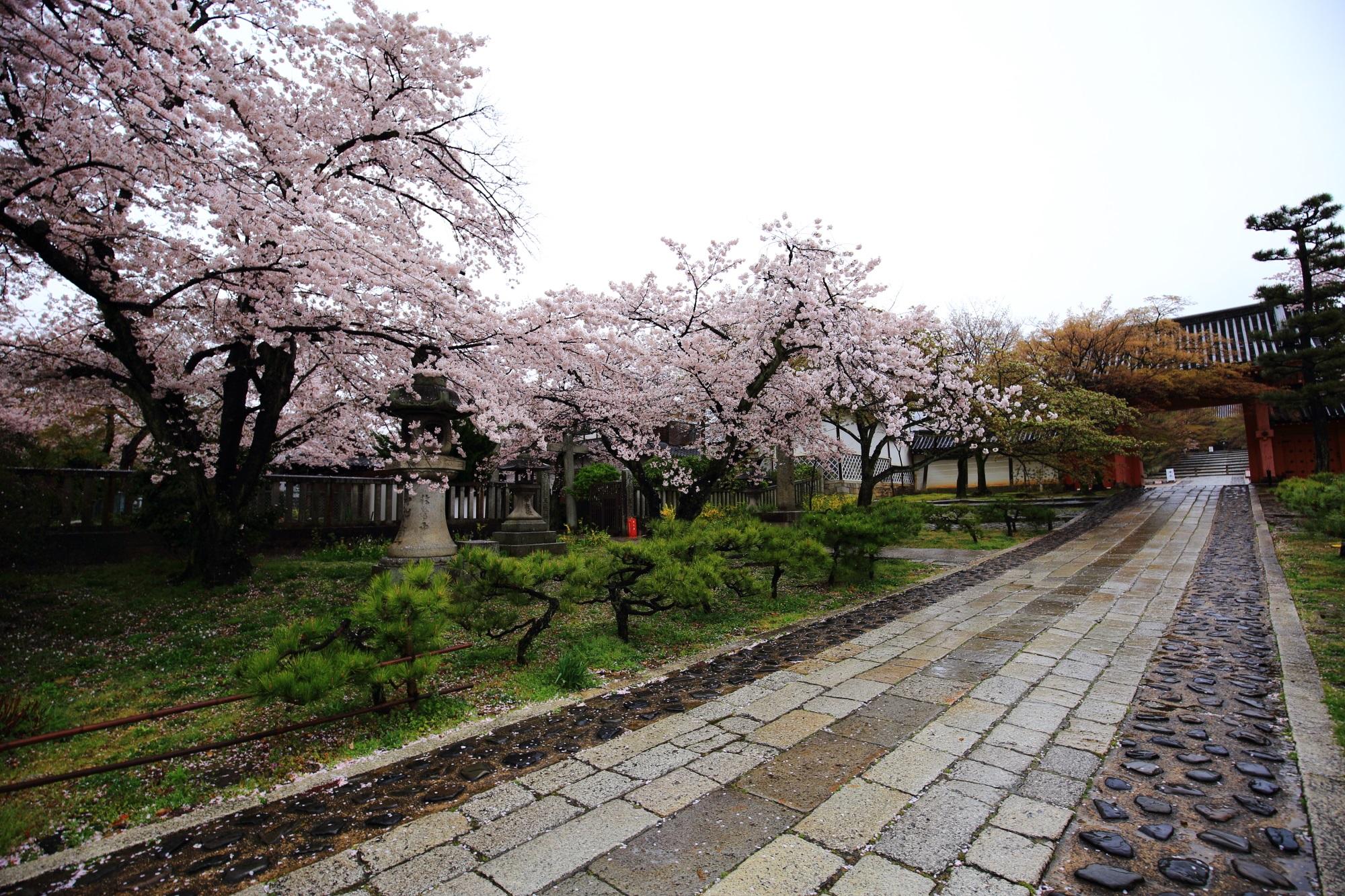 真如堂の赤門(総門)と満開の桜