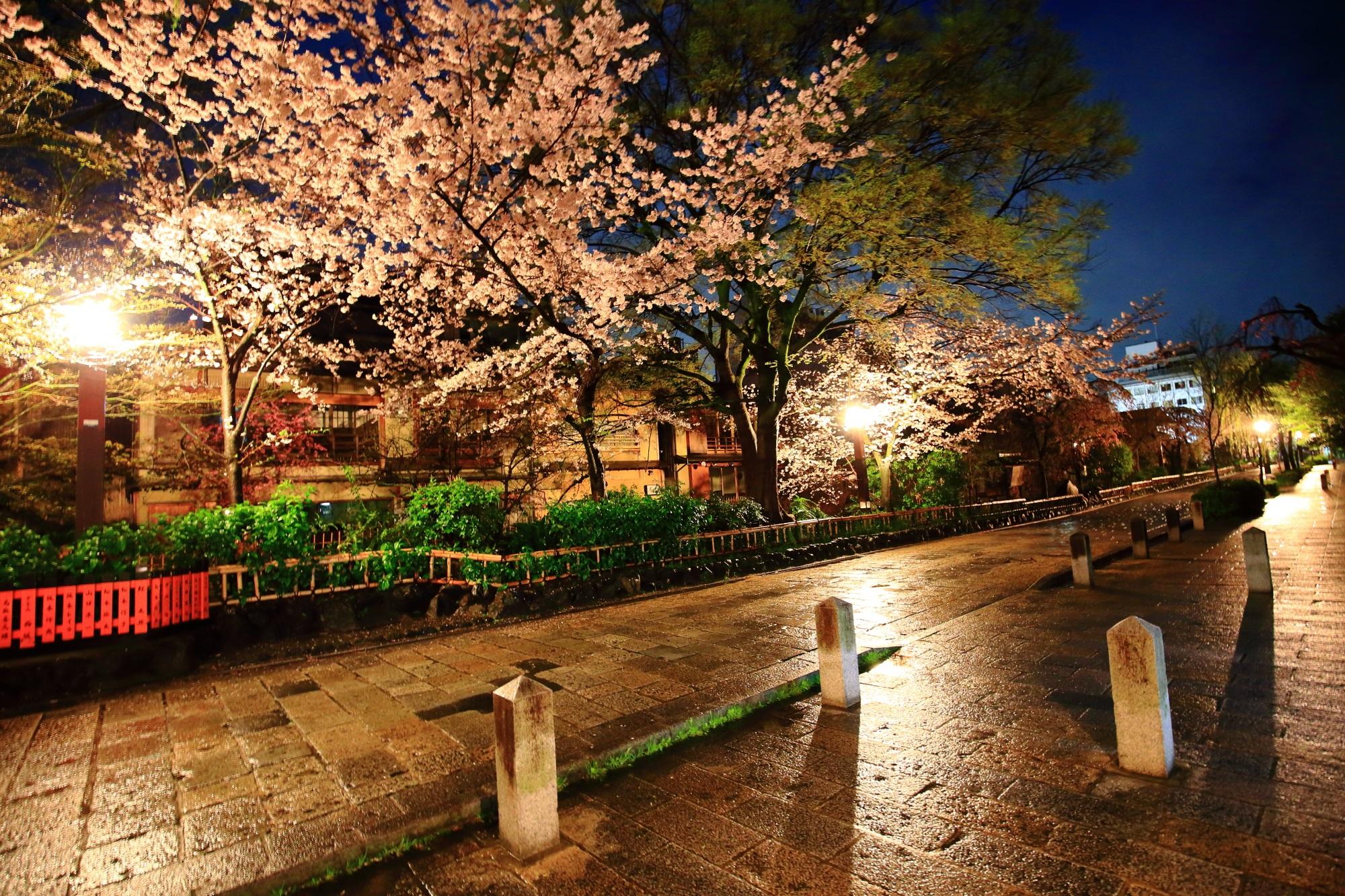 桜の名所の祇園白川の誰もいない桜の景色