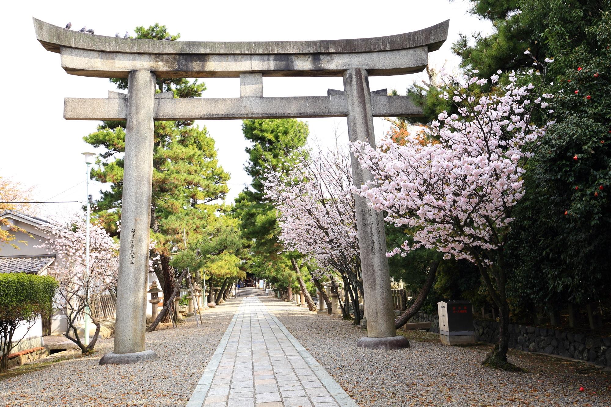 御香宮神社の鳥居と桜