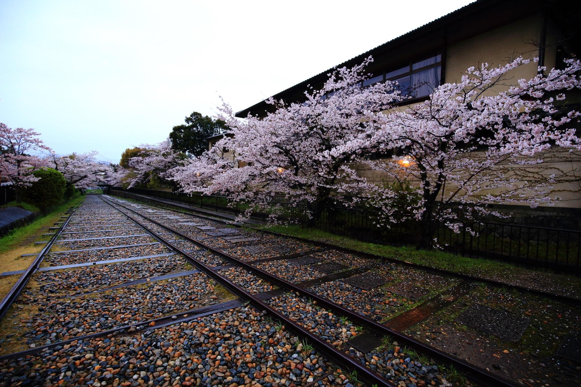 線路の上を優雅に咲き誇る桜