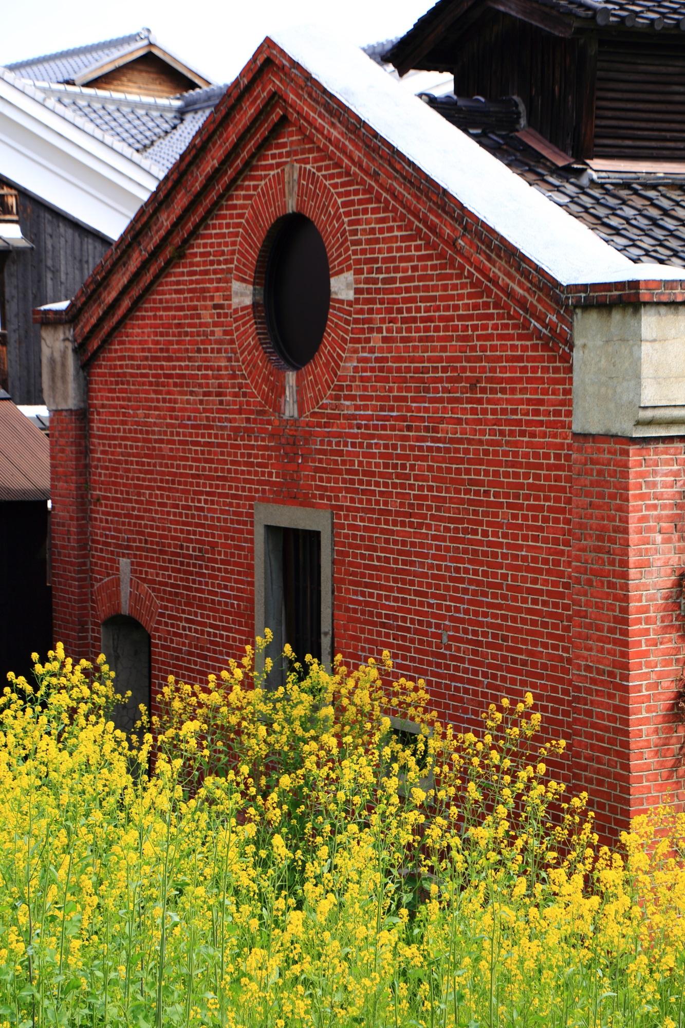 レンガ造りのレトロな建物を賑やかに華やぐ黄色い菜の花