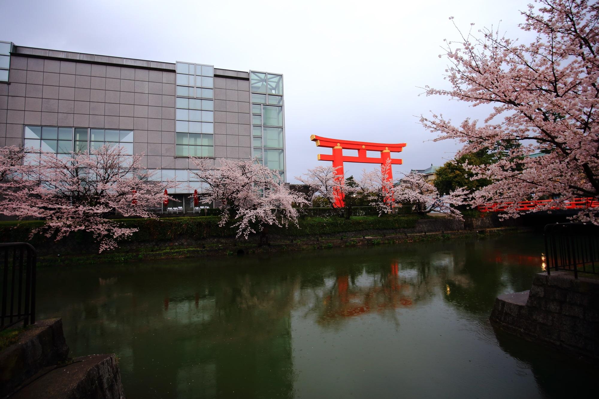 Kyoto Okazaki-Sosui cherry blossoms