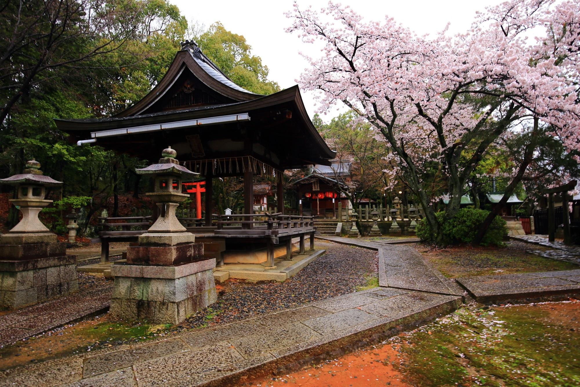 竹中稲荷神社の拝殿と本殿と満開の桜