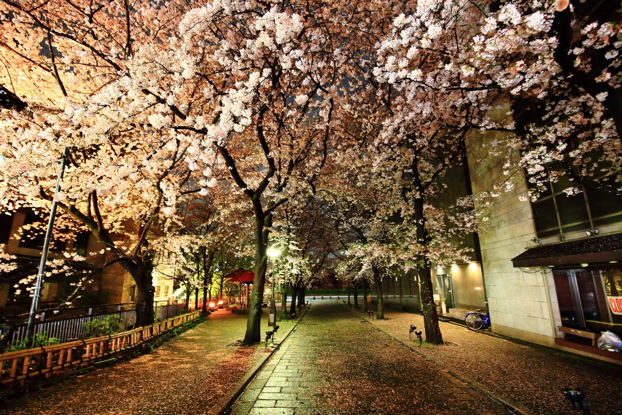 祇園白川 桜 満開 春