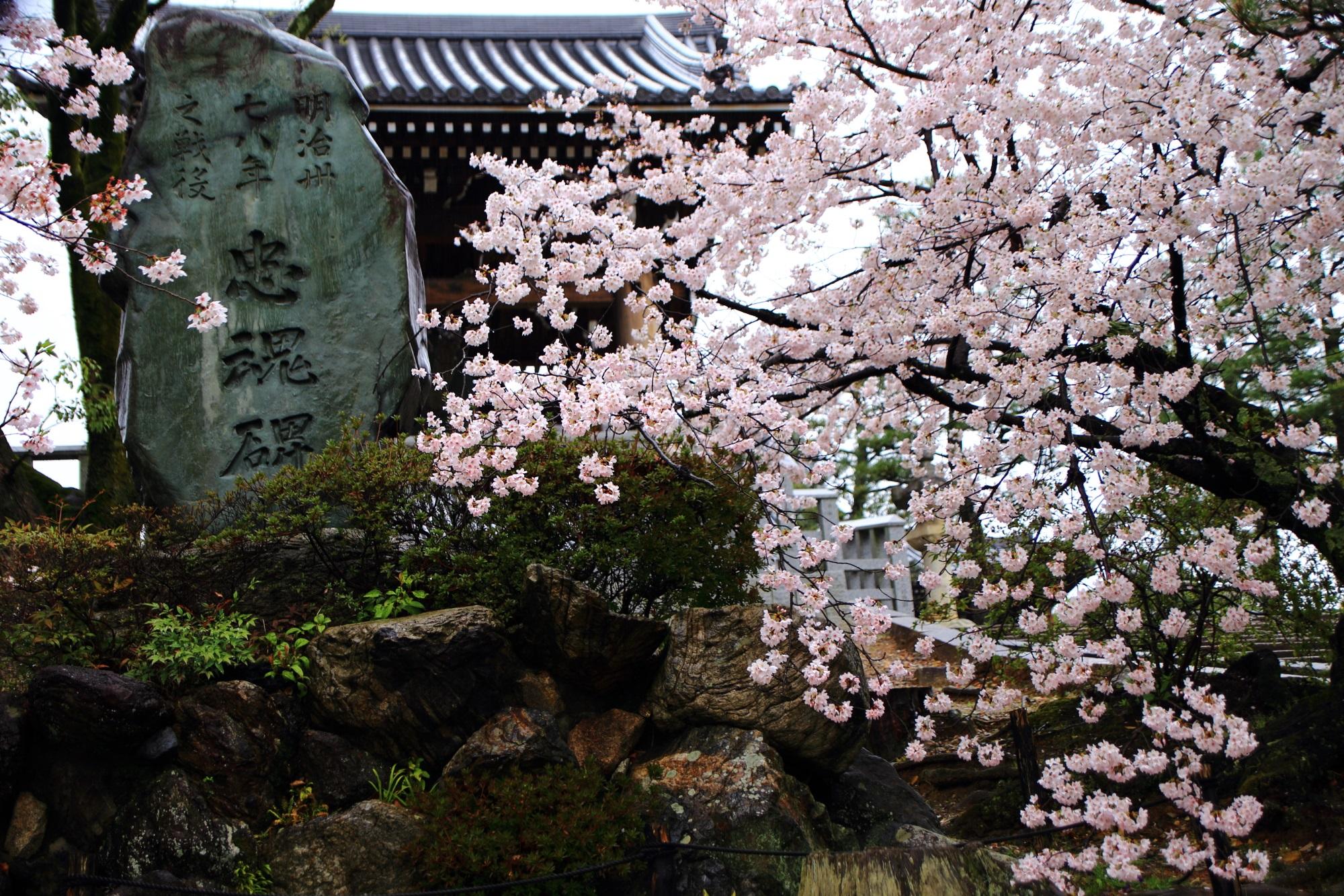 石段横の忠魂碑と桜