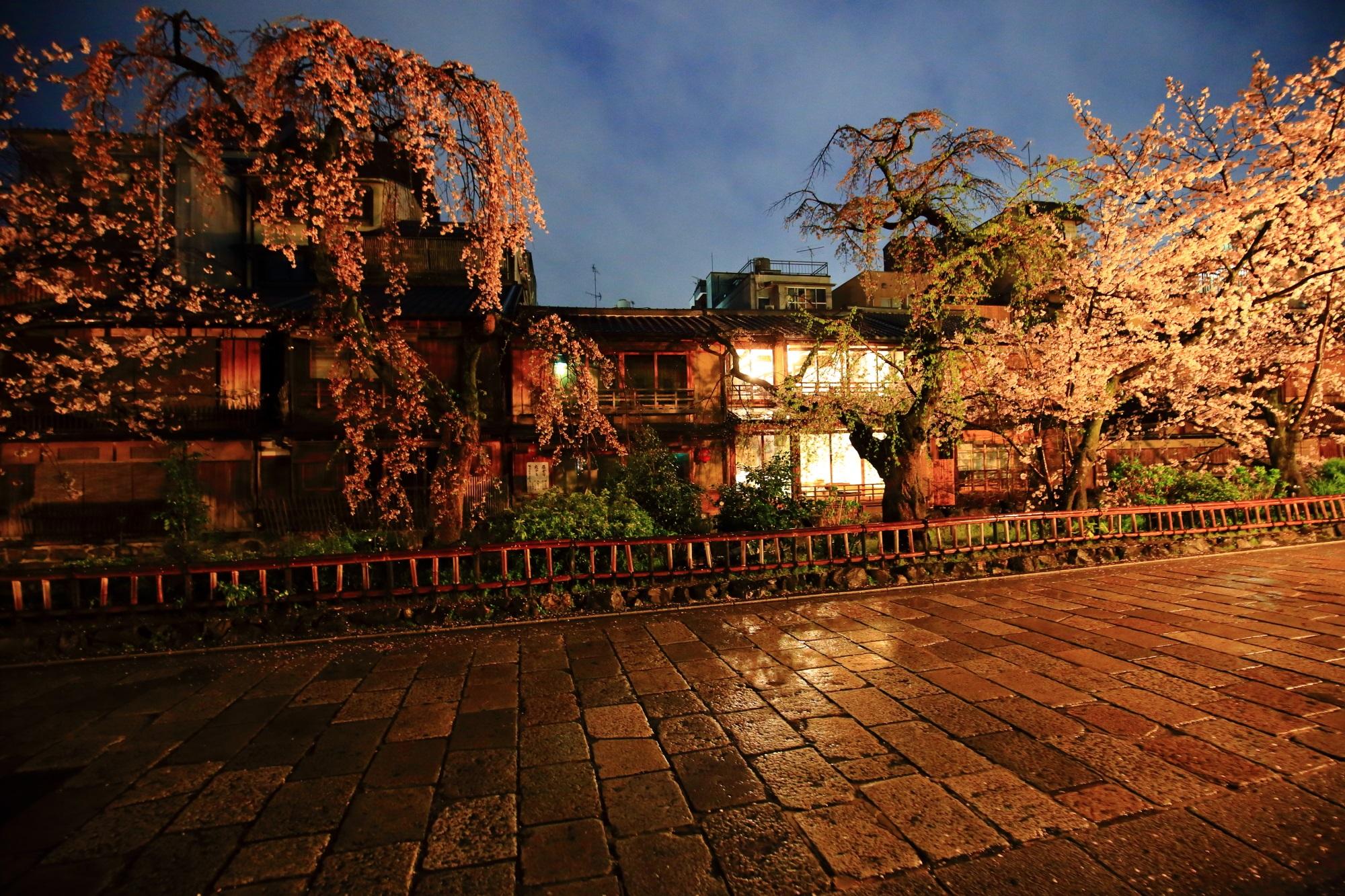 祇園白川 しだれ桜 名所 春 満開