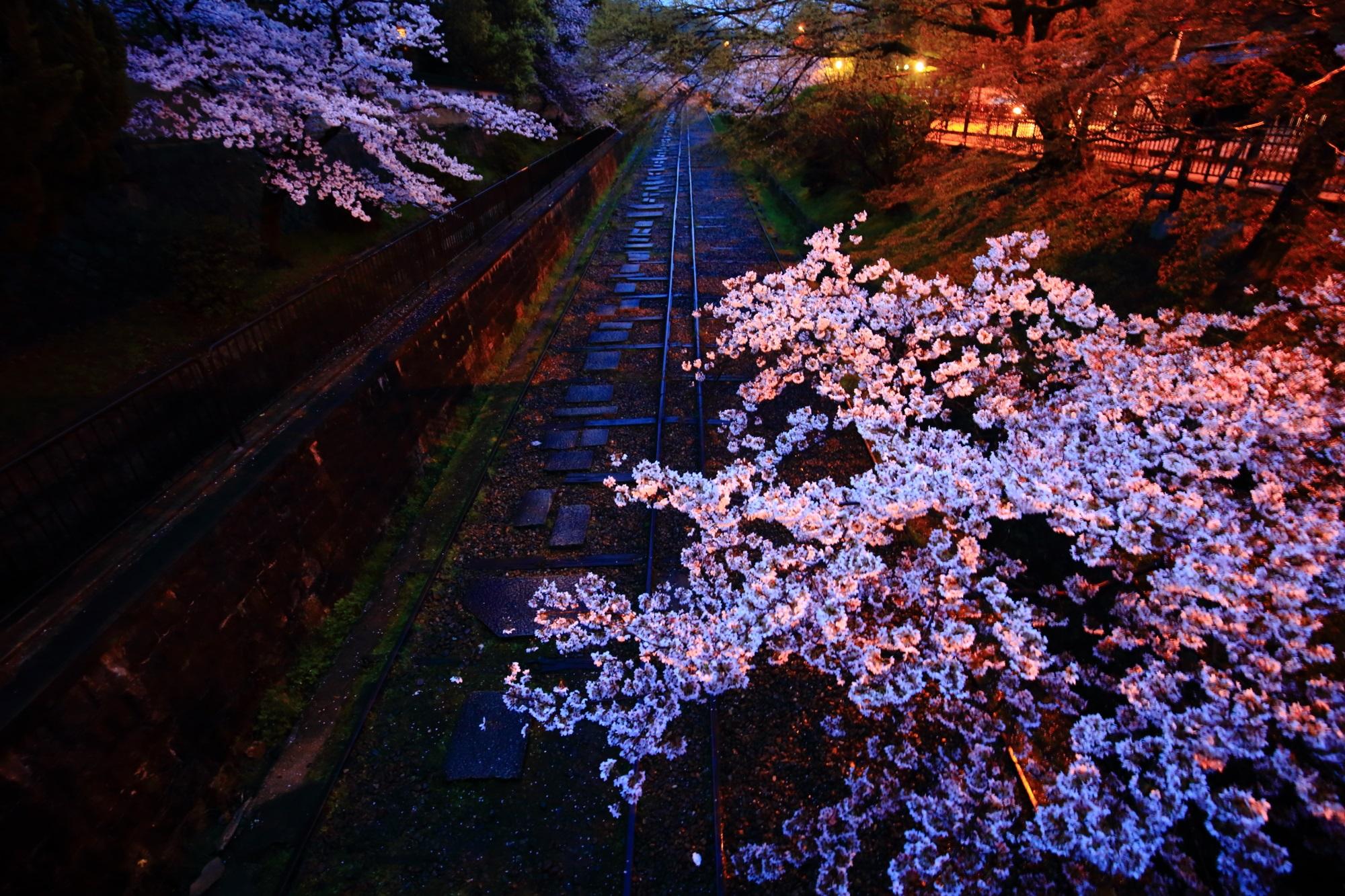 南禅寺前参道の橋の上から眺めた蹴上インクラインの桜