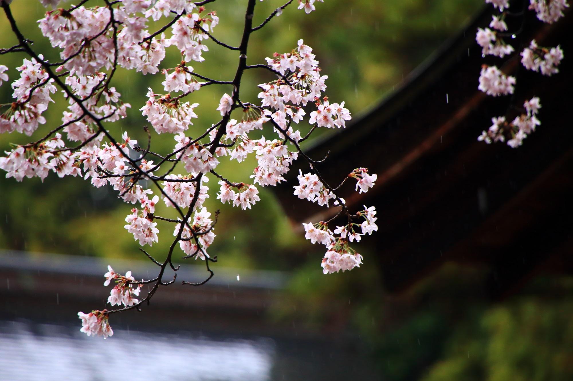 むねただじんじゃ 桜 春 満開 名所