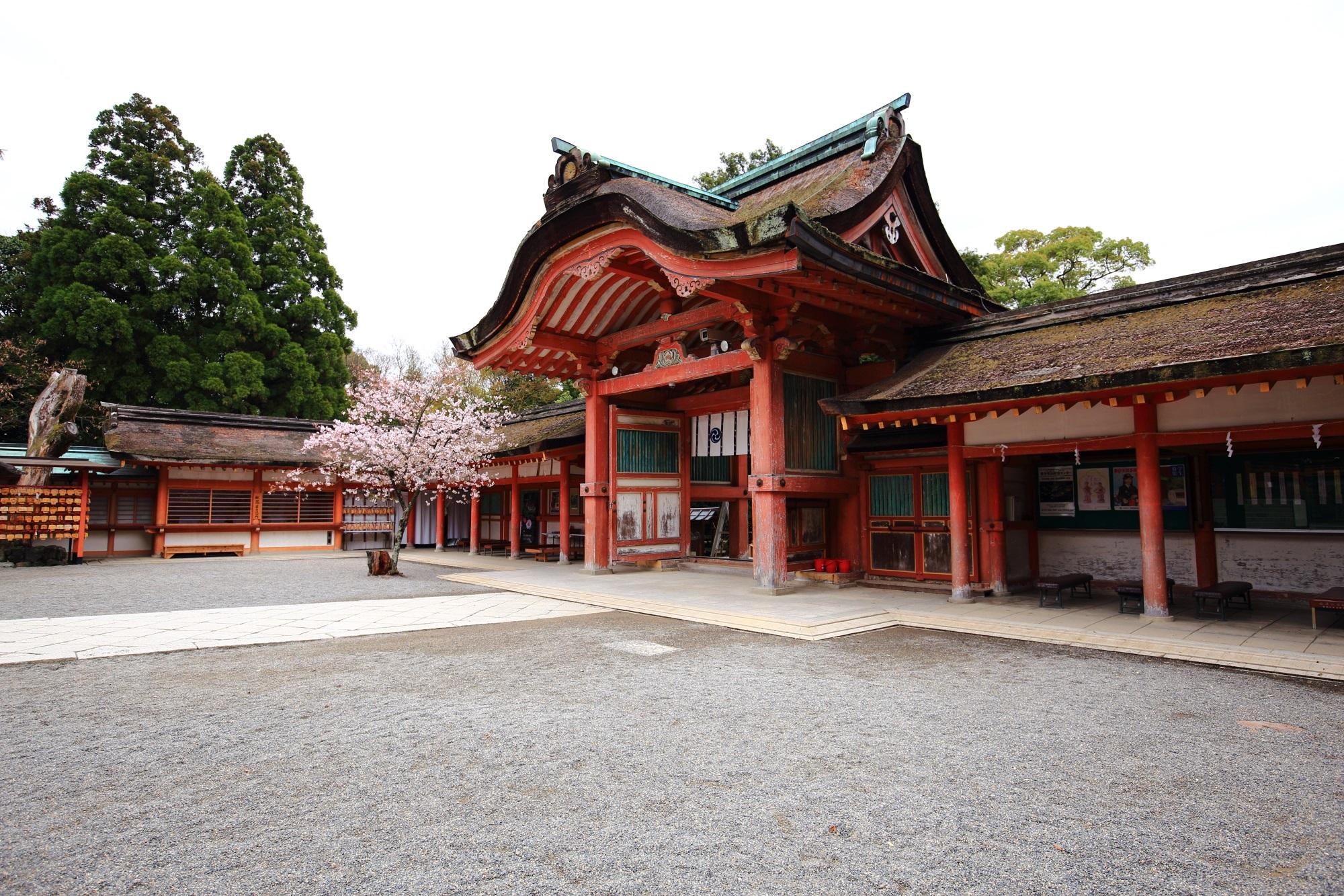石清水八幡宮の南総門と桜