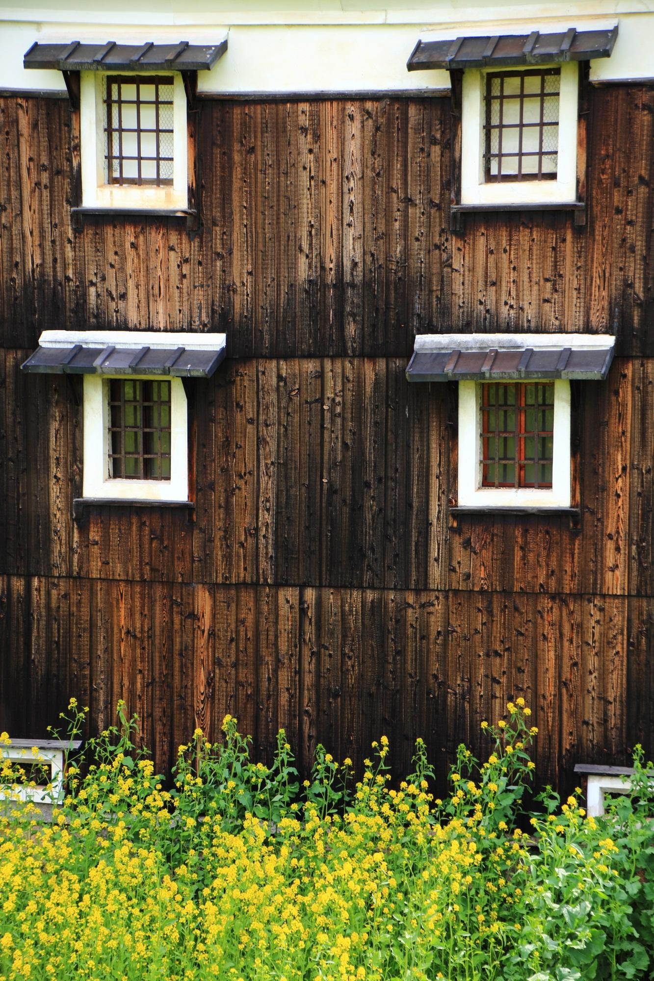 独特の木の壁と白枠の窓を彩る黄色い菜の花