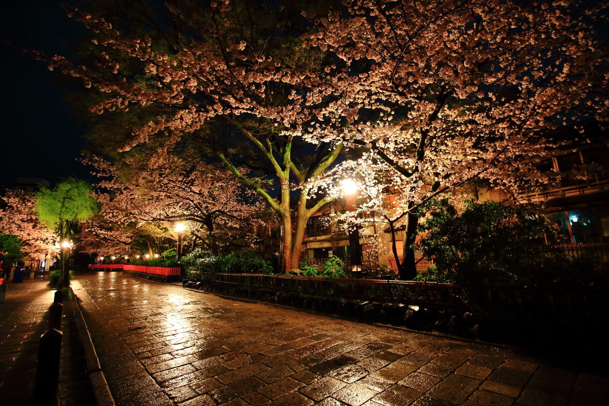 ぎおんしらかわ 桜 名所 満開 春