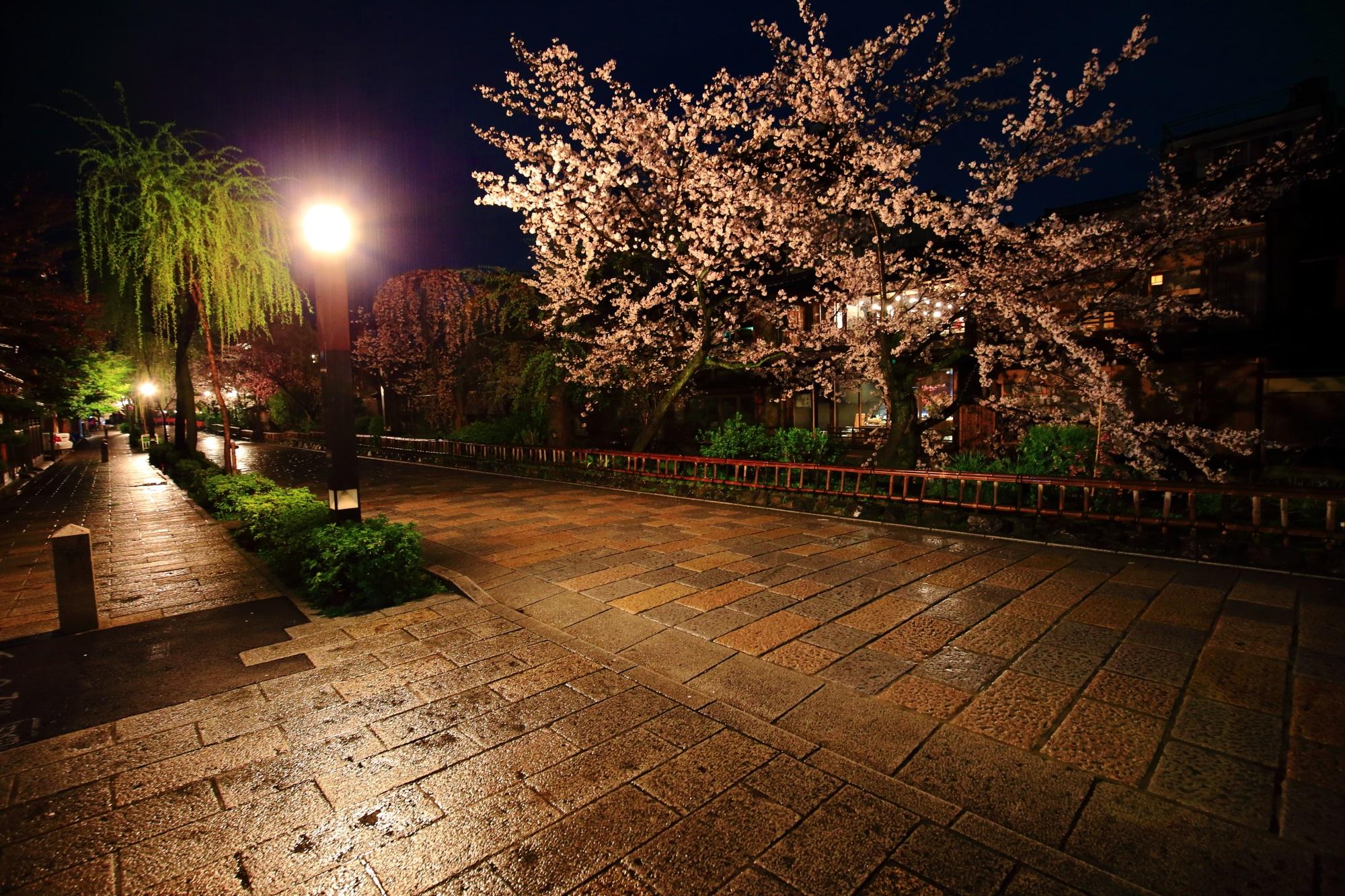 高画質 桜 写真 祇園白川 満開 春