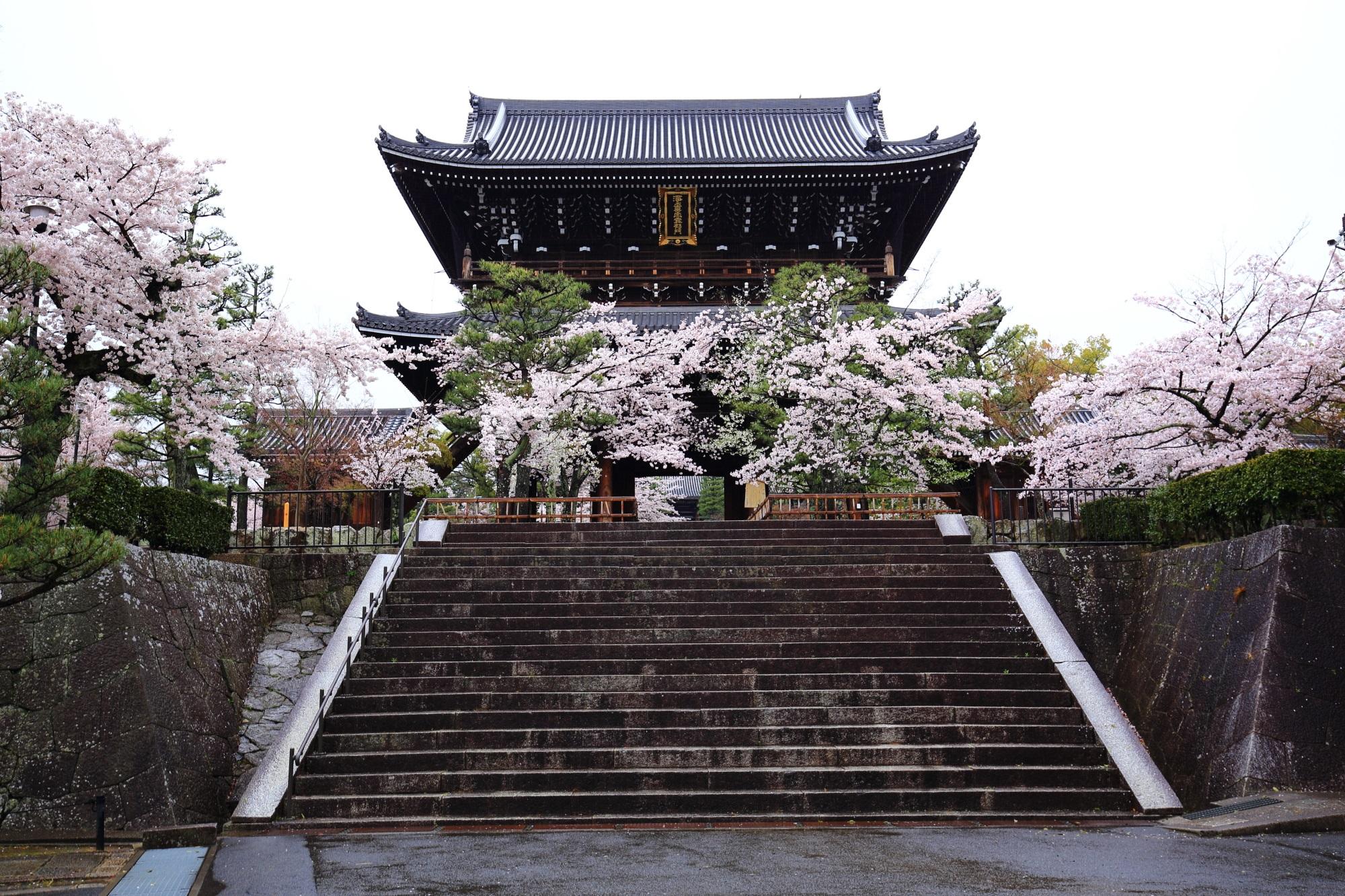 金戒光明寺(こんかいこうみょうじ)の山門と桜