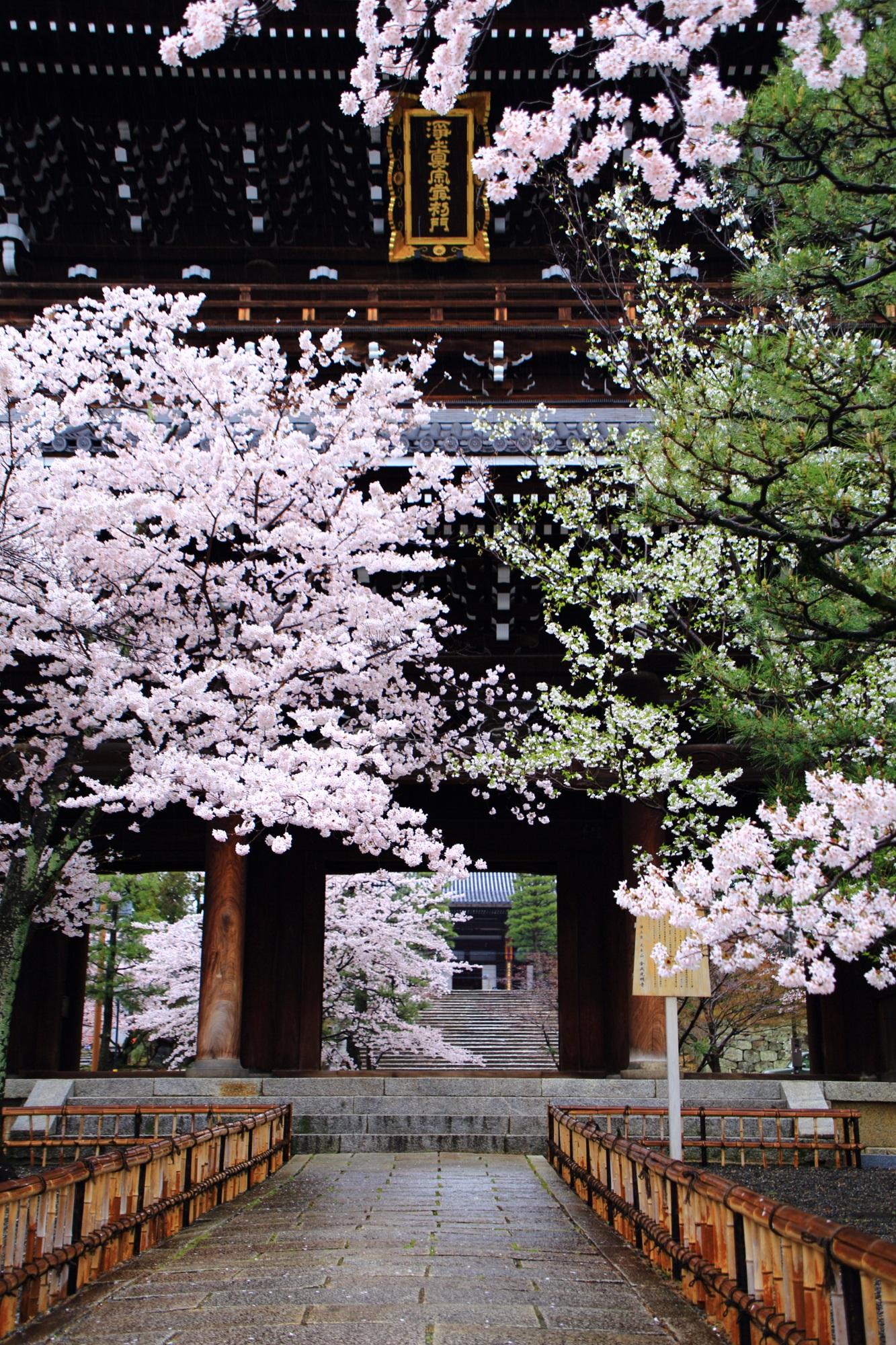 金戒光明寺の素晴らしい桜と春の情景
