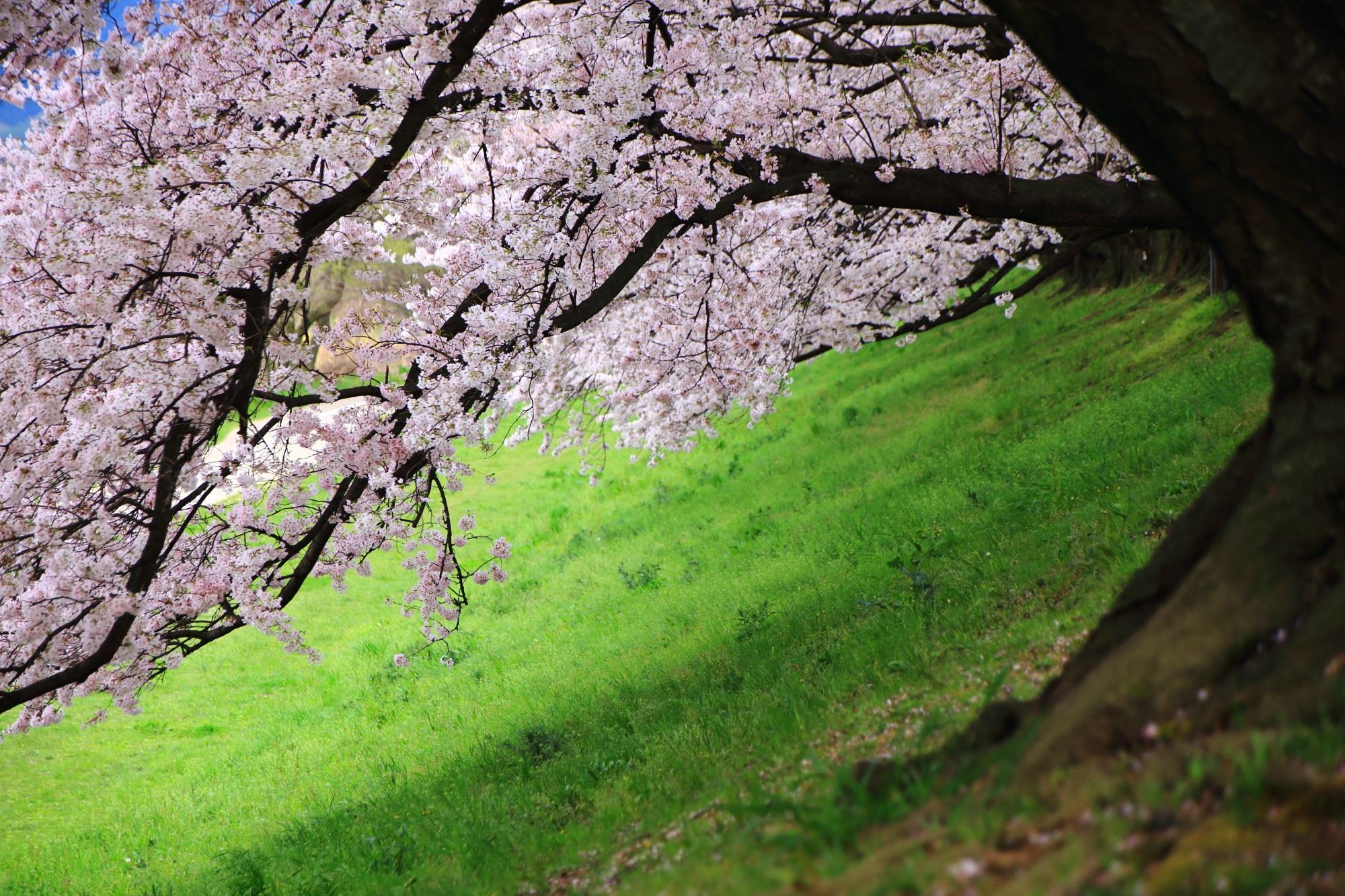 長閑で華やかな春の雰囲気
