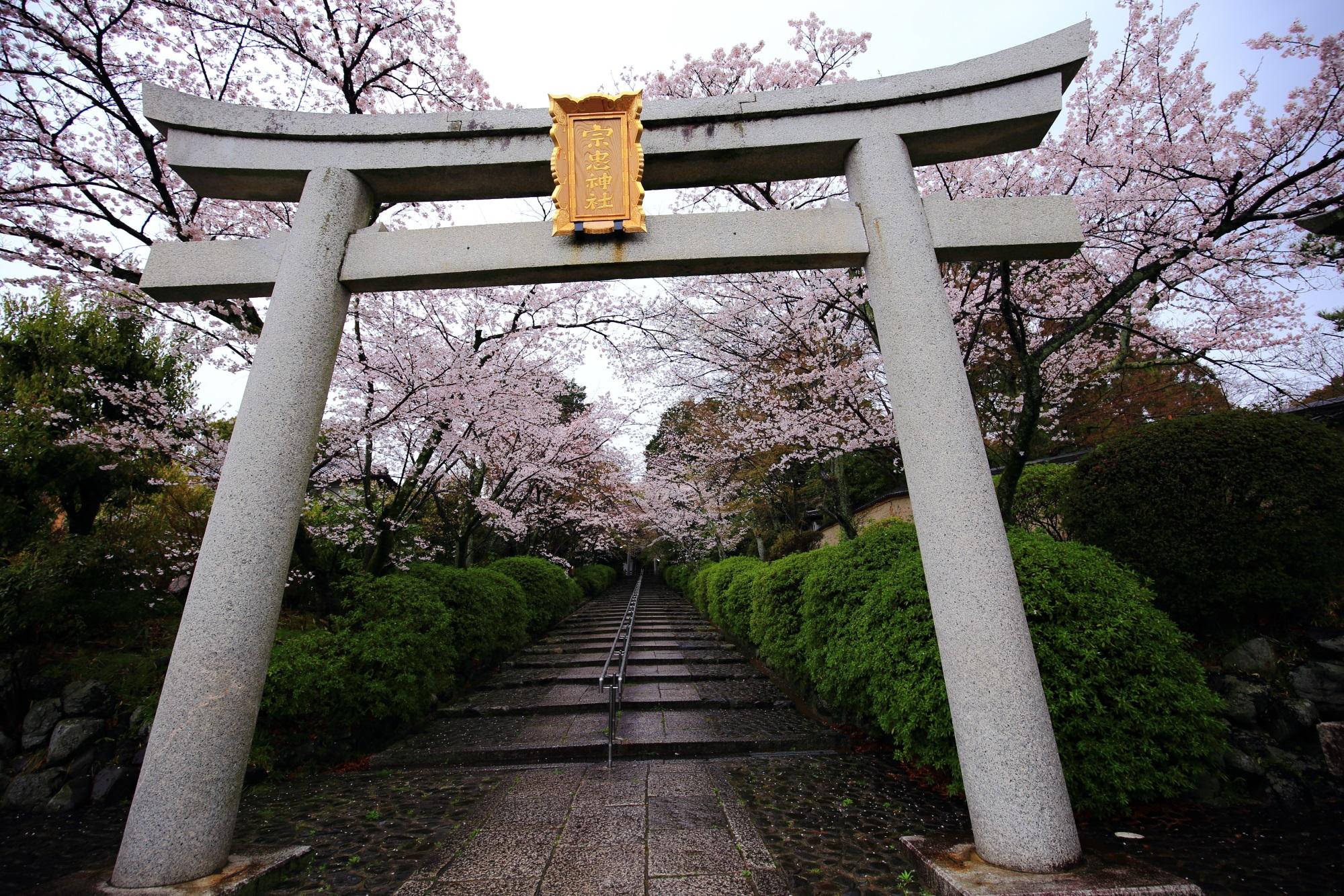 高画質 宗忠神社 桜 写真 満開