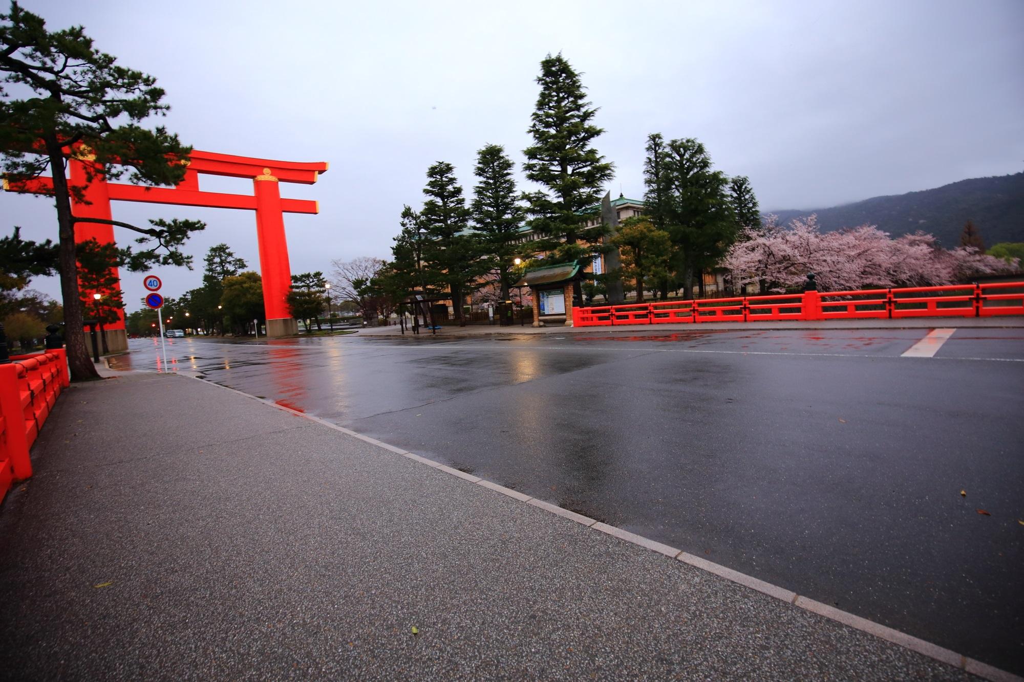誰もいない満開の桜の岡崎疏水と平安神宮の鳥居
