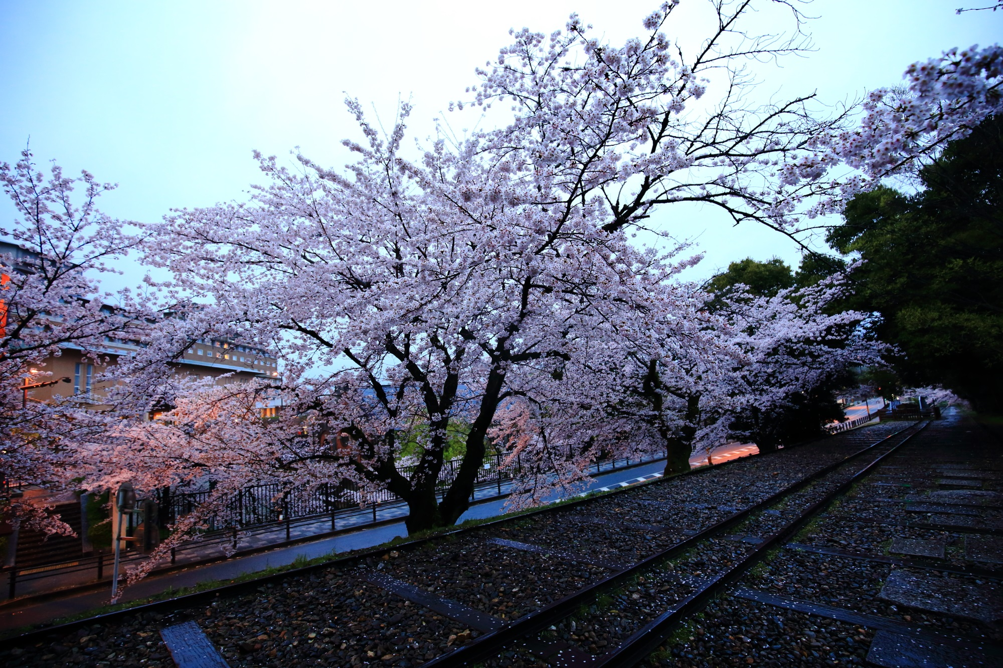 線路と桜を独り占めの春の蹴上インクライン